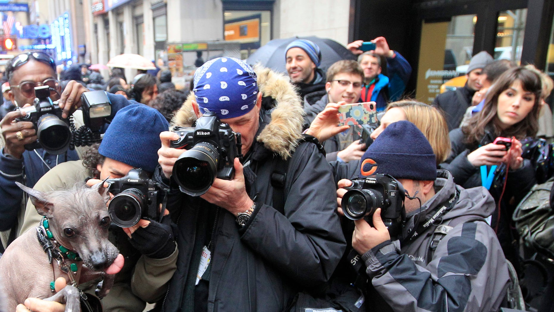 Photographers surround Alma Dulce, a 2-year old Xoloitzcuintli ahead of a news conference, on Jan. 26, 2012 in New York.