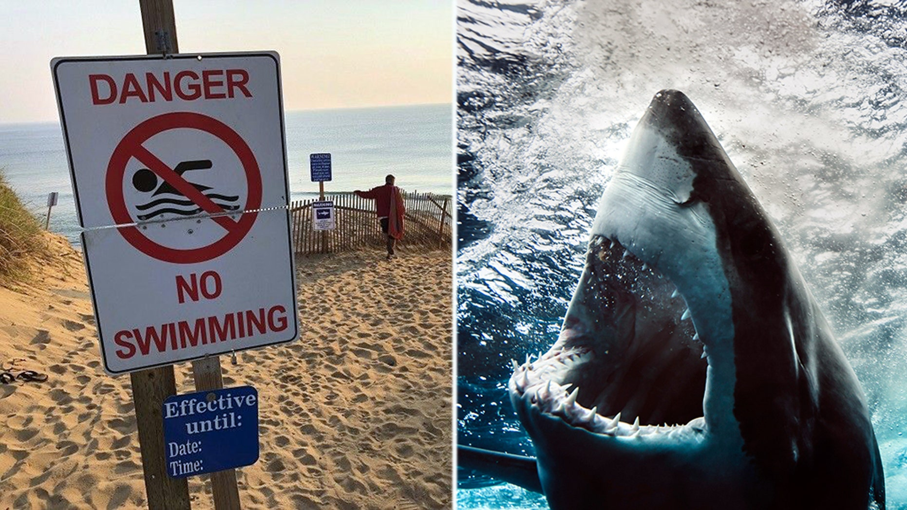 William Lytton, 61, of Scarsdale, NY, was bitten by a shark at a Cape Cod beach on Wednesday, August 16 2018.