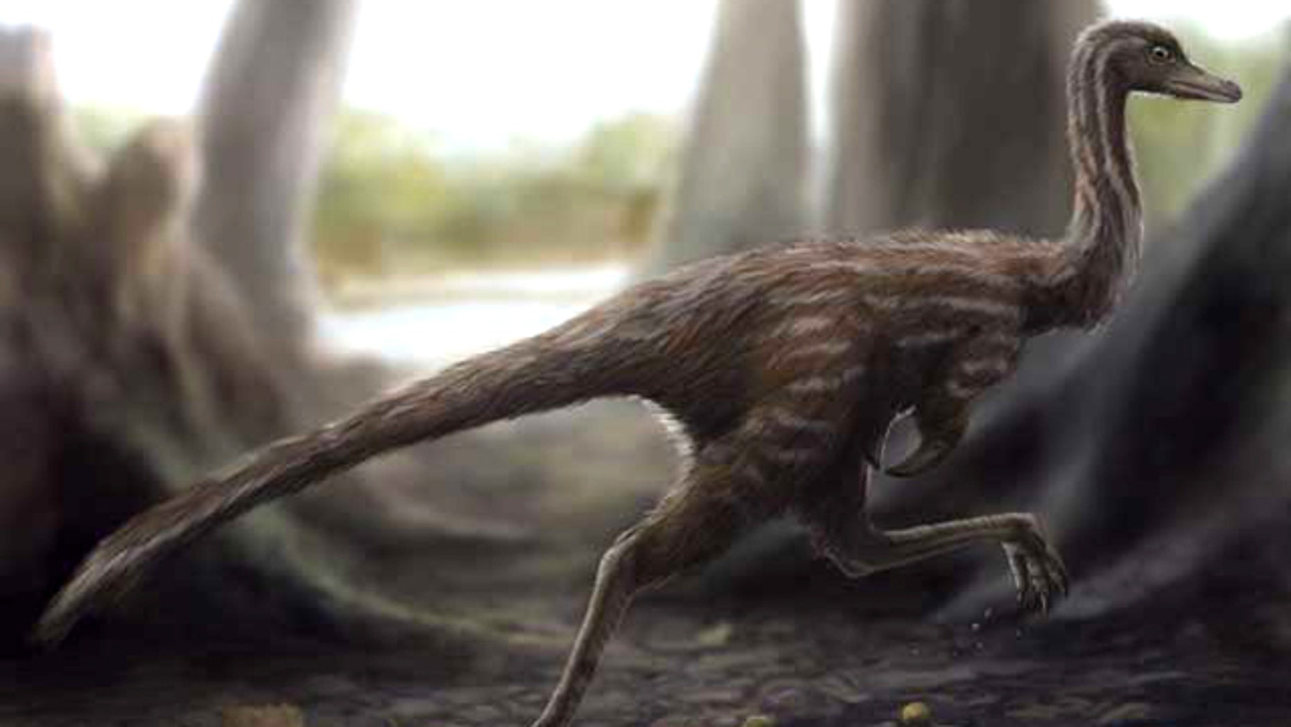 One of the smallest known dinosaurs, Xixianykus zhangi (shown here in a reconstruction) was built for quick running. A shorter upper leg relative to its lower leg helped the dinosaur carry its weight more efficiently.