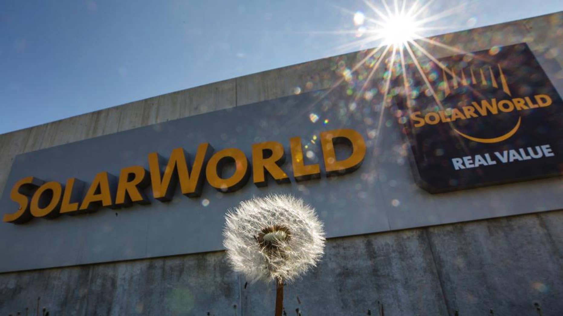 A dandelion stands in front of Solarworld a building in Arnstadt, Germany, Thursday, May 11, 2017. The solar panel manufacturer Solarworld is to file for insolvency. SolarWorld AG has filed for insolvency, citing the effect of falling prices in the industry. (Arifoto Ug/Michael Reichel/dpa via AP)