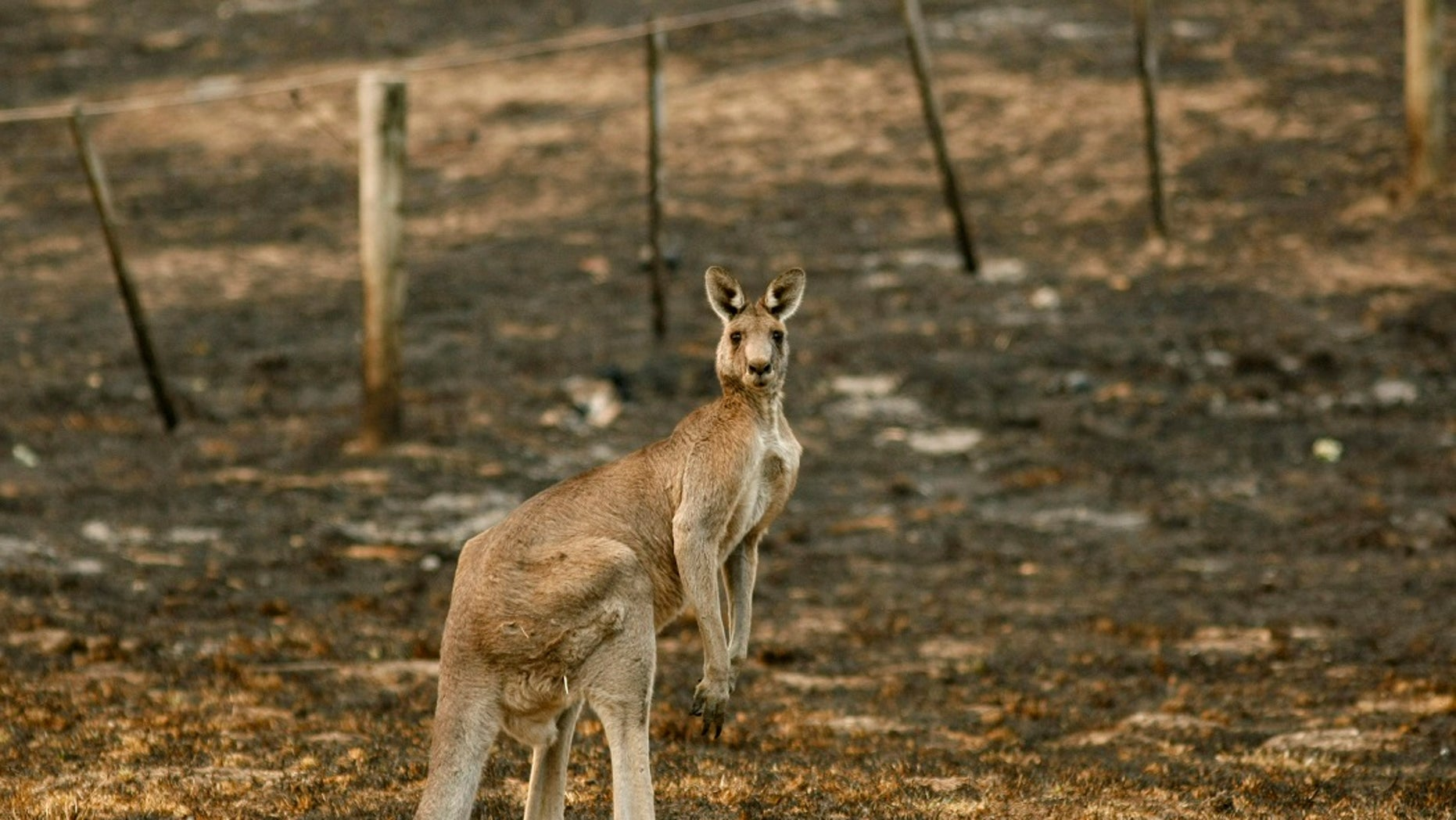 A 9-year-old girl visiting Harmony Park Safari in Alabama on Saturday was reportedly attacked by a kangaroo.