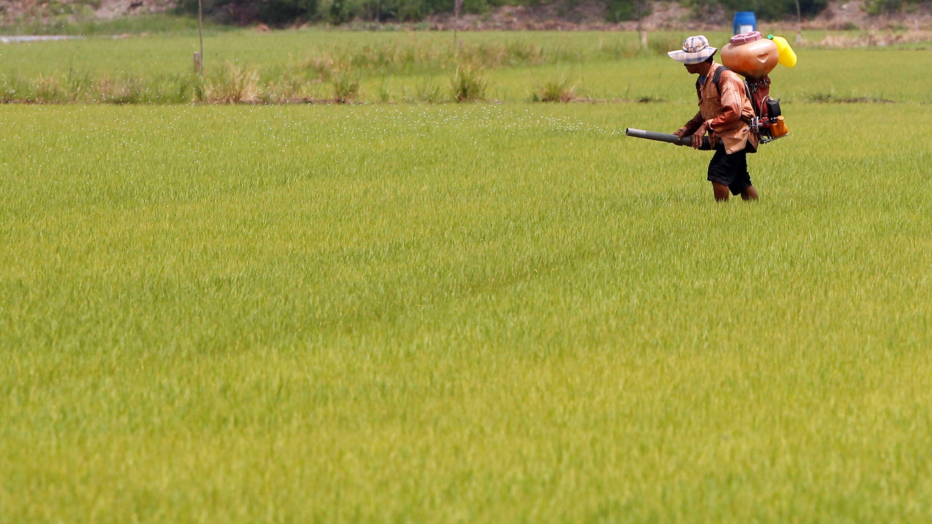 File photo: A farmer sprays pesticide over his rice field in Nonthaburi province, on the outskirts of Bangkok, Thailand, June 8, 2017. (REUTERS/Chaiwat Subprasom)