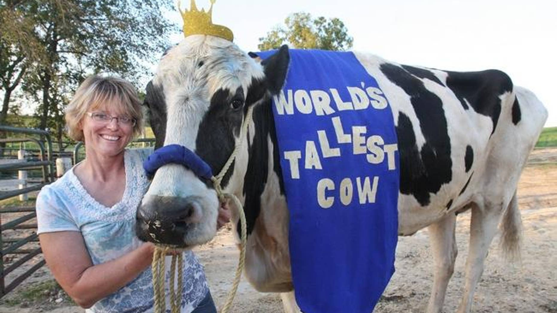 In this Sept. 19, 2014 photo, Patty Hanson poses with her prize-winning cow Blosom at her farm in Orangeville, Ill. Hanson says Blosom, the world's tallest cow has died after holding the title for less than a year.  Hanson says that her 6-foot-4 cow died May 26, 2015 on her farm. She is not sure what happened to Blosom, but she decided to put the 13-year-old Holstein down after two veterinarians said there was nothing they could do to save her.  (The Journal-Standard via AP) MANDATORY CREDIT
