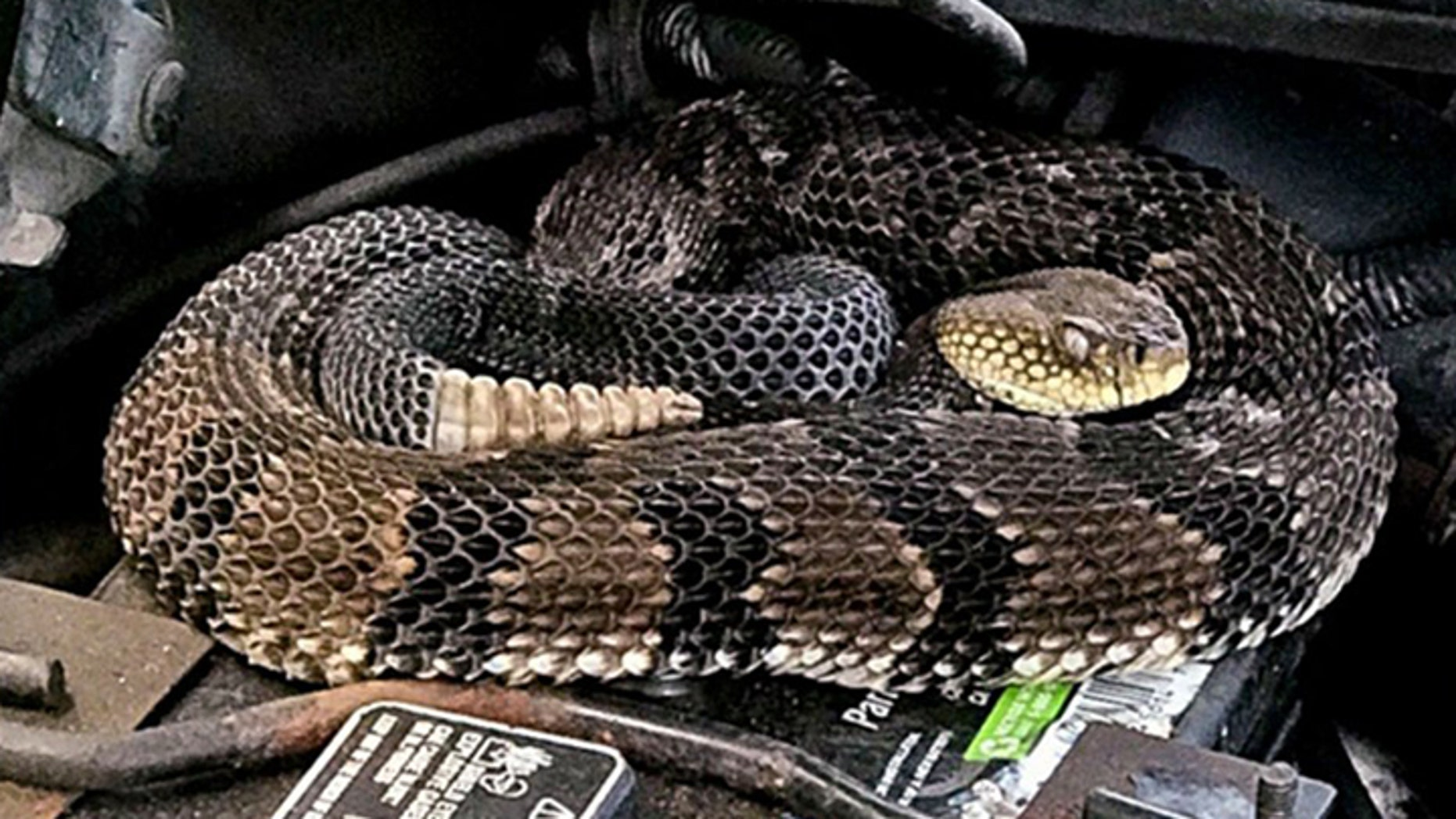 A man jump-starting his car was surprised to find a rattlesnake in his engine.