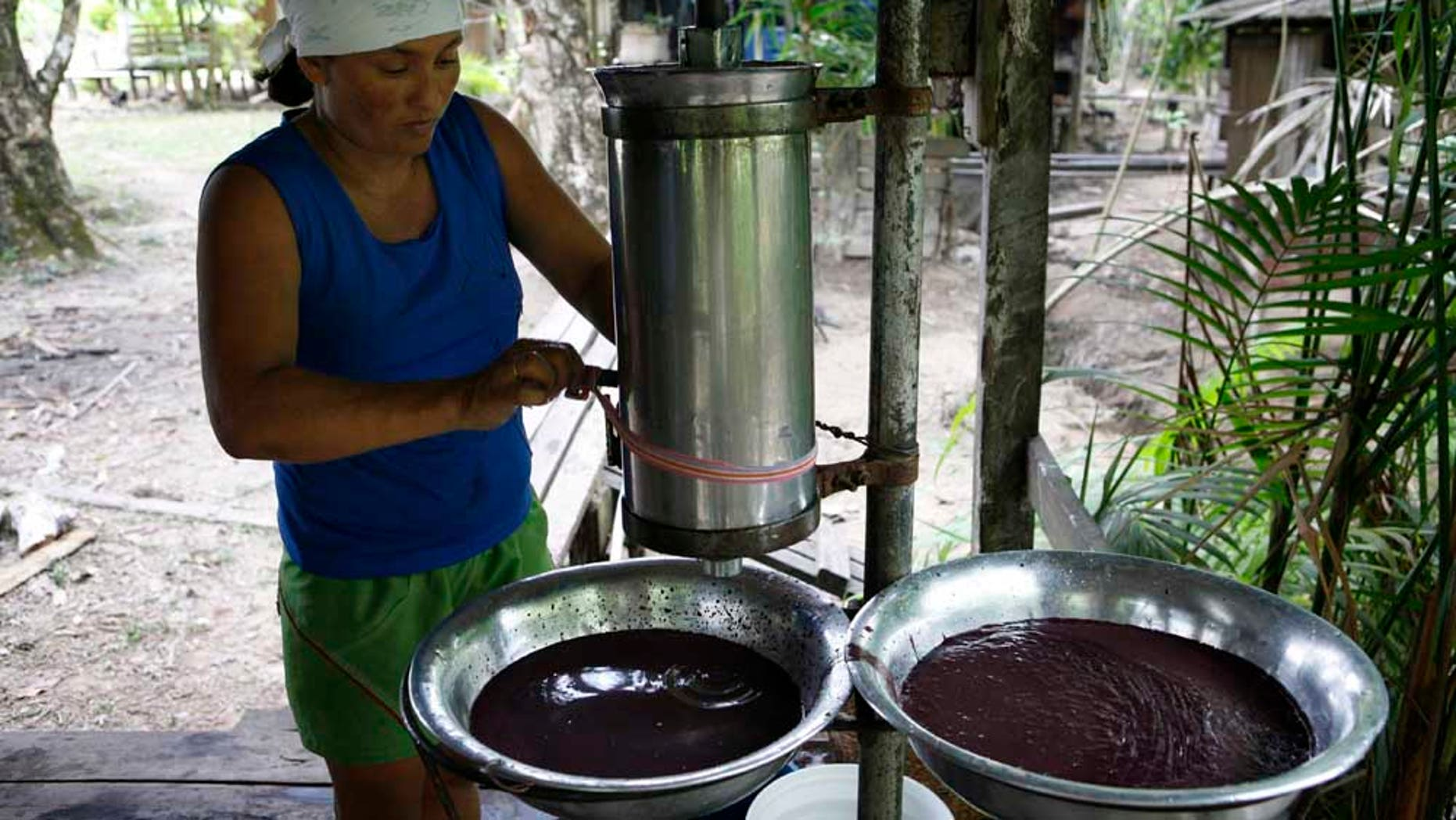 Oct 26, 2007 - Picanco River, Amazon, Brazil - The Ribeirinhos (river people) living on the Picanco River, Amozanian Estuary. LURDIEL DE SOUZA MAIA (age 33) makes Acai berry pulp. Intensive cattle and soya plant farming is decimating the Amazon rainforest, but there is hope. A marble-sized, purple berry is the staple ingredient of a popular smoothie  (Newscom TagID: zumawirewestphotos553698) [Photo via Newscom]