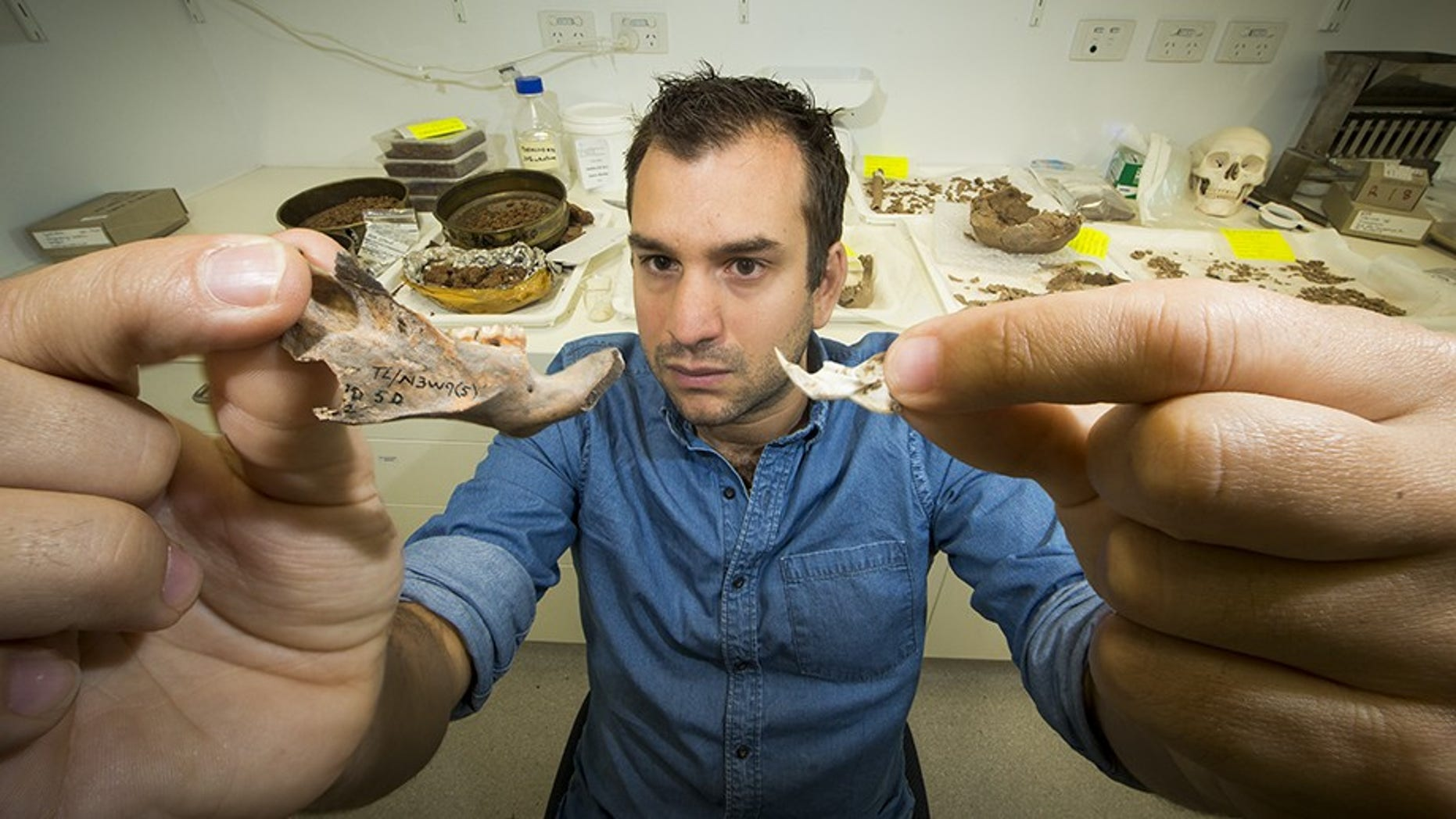 Julien Louys holds the jaw bone of a giant rat species discocvered on East Timor, up against a comparison with the same bone of a modern rat. (Stuart Hay, ANU)