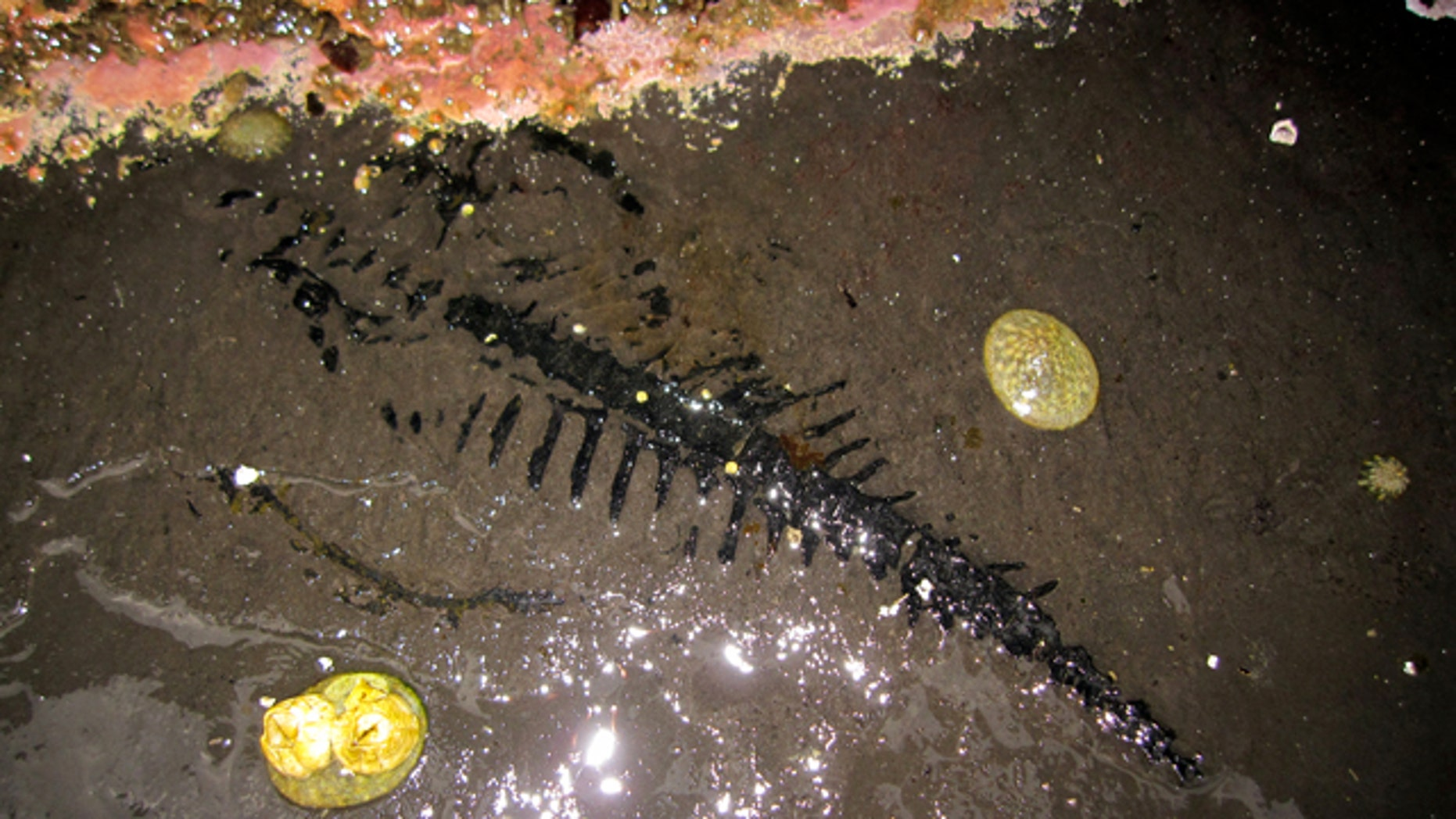 Low tides revealed this rare fossil find in Alaska.