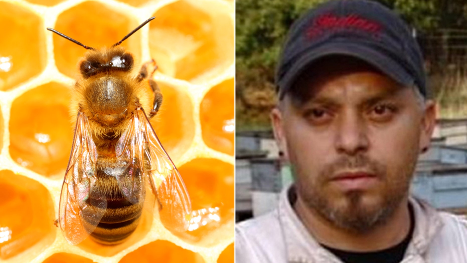 An estimated 200,000 honeybees owned by beekeeper Alfonso Perez were killed Saturday after suspected vandals doused them with gasoline.