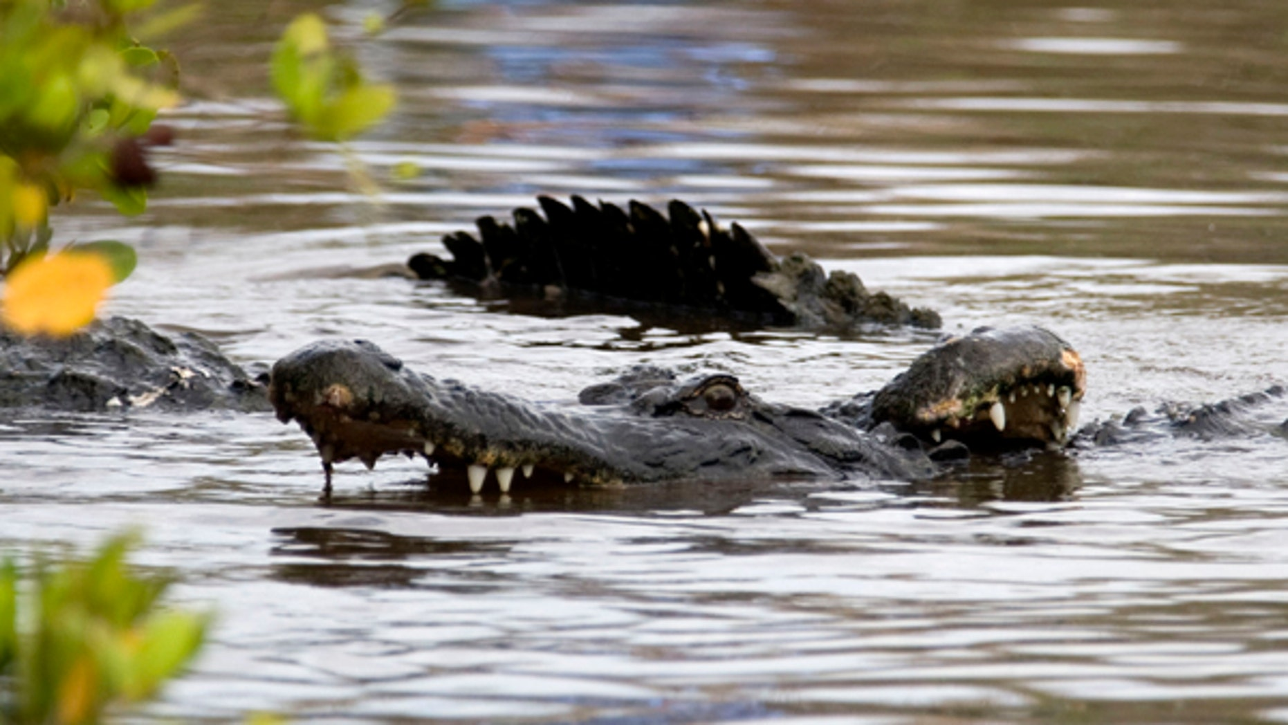 American alligators fight near launch pad 39A at Kennedy Space Center in Cape Canaveral, Florida June 7, 2007. REUTERS/Charles W. Luzier (UNITED STATES) - RTR1QK2L
