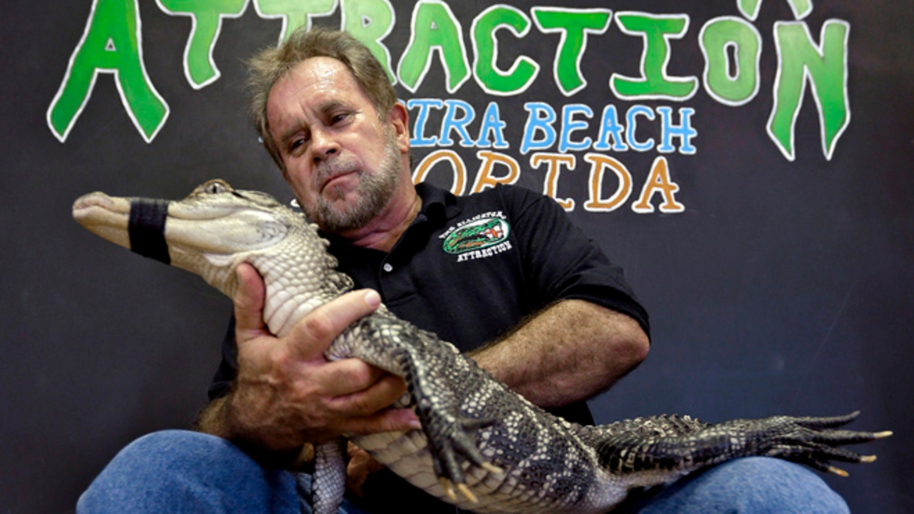 Sept. 26, 2012: Bob Barrett, owner of The Alligator Attraction poses with one of his alligators in Madeira Beach, Fla.