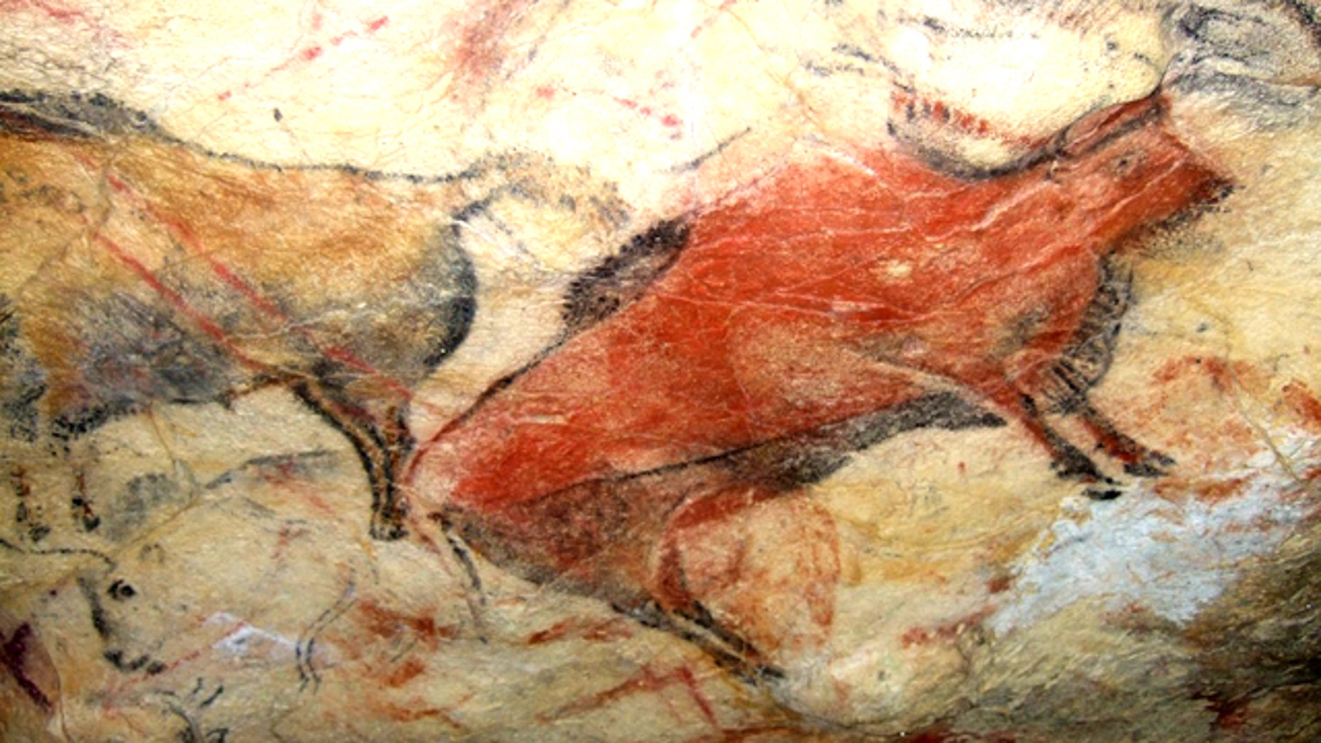 A painted bison on the ceiling of Altamira cave in Spain. The cave is closed to the public because human incursions have caused damage to the 14,000-year-old paintings.