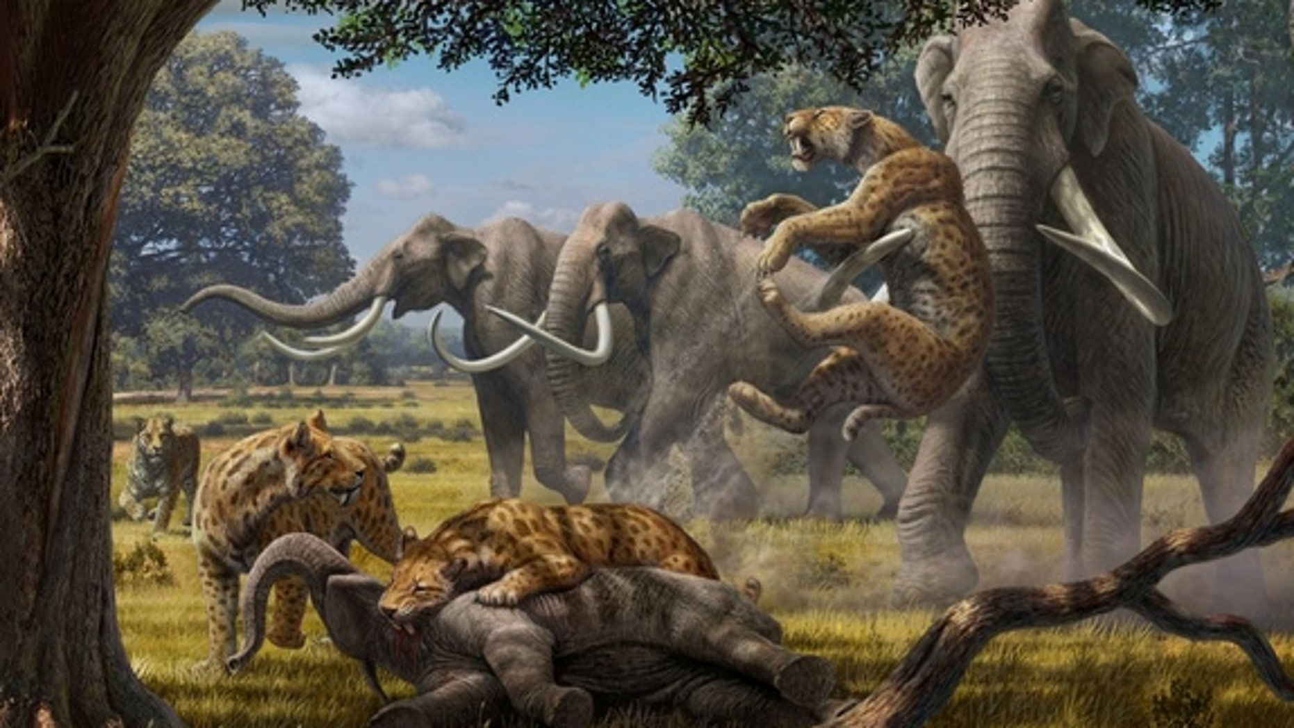 Biologists have found that a pack of hypercarnivores, such as saber-toothed cats (shown here fighting with adult Colombian mammoths over a young mammoth carcass), could have taken down juveniles of Earth's largest herbivores.