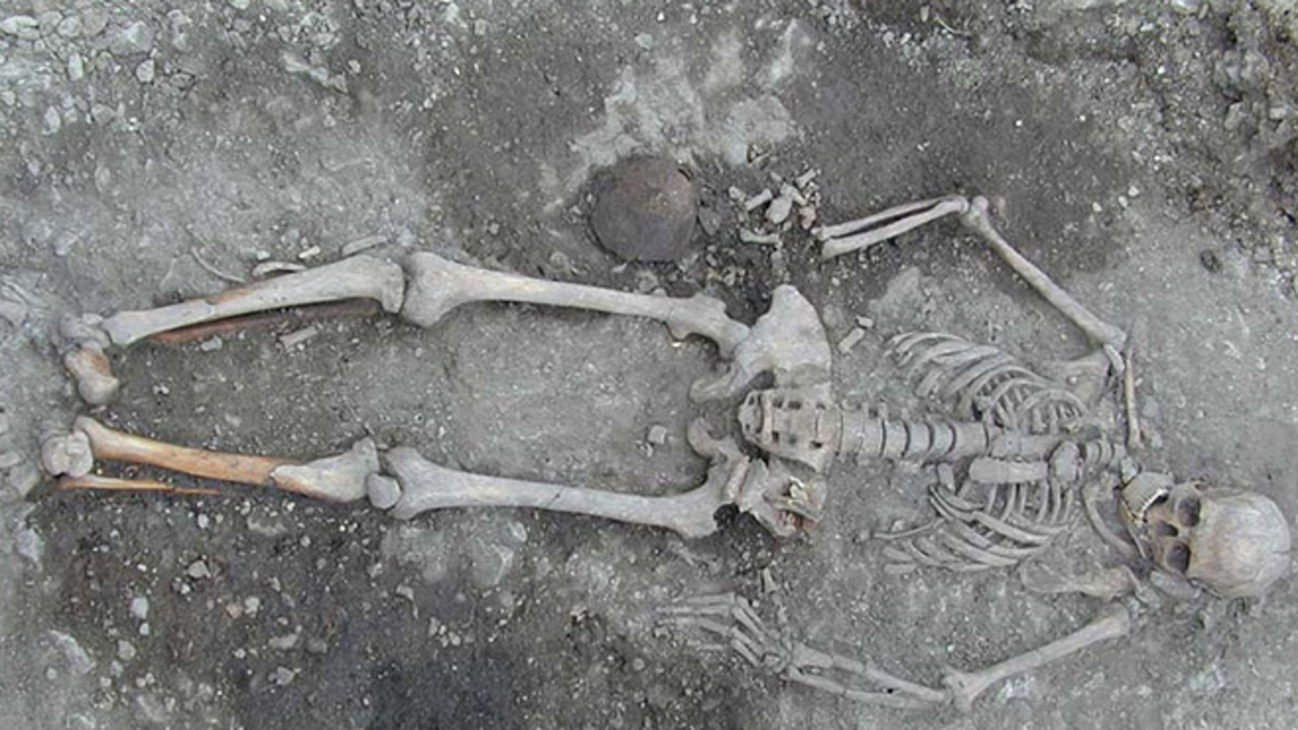 DNA taken from ancient European skeletons reveals that the genetic makeup of Europe mysteriously transformed about 4,500 years ago, new research suggests. Here, a skeleton, not used in the study, but from the same time period, that was excavated from a grave in Sweden.