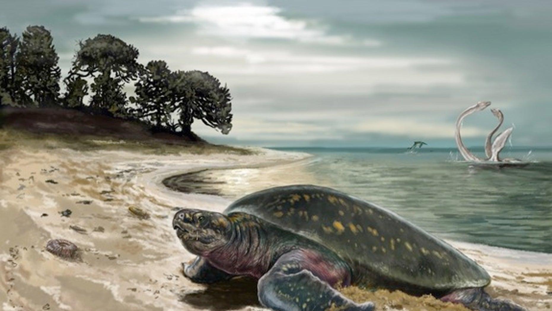 An illustration of the now-extinct sea turtle <em>Desmatochelys padillai</em>.