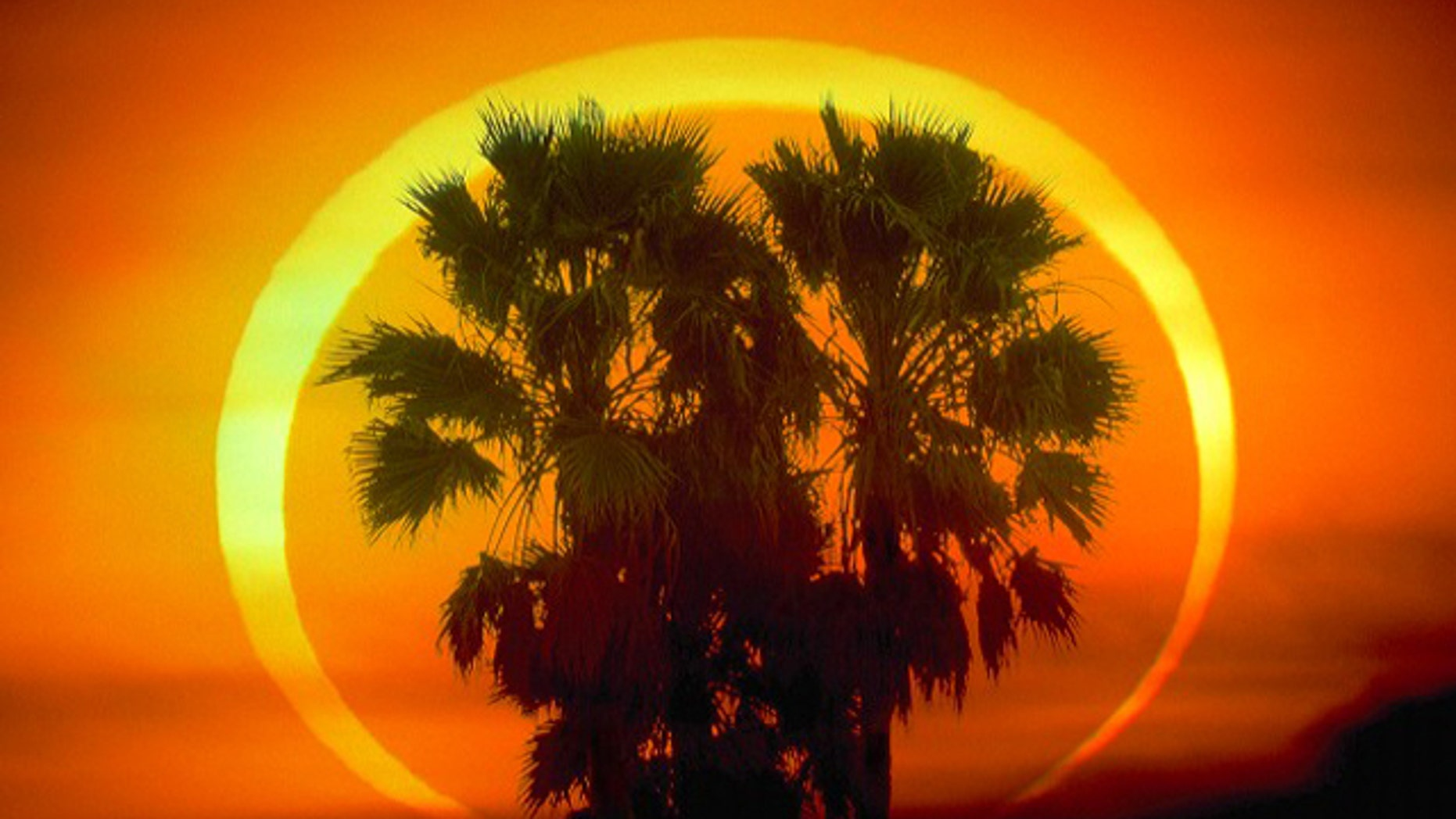 A spectacular annular eclipse photographed behind palm trees in 1992. On Friday, India launched a floatila of rockets to see how today's eclipse affected the Earth's atmosphere.