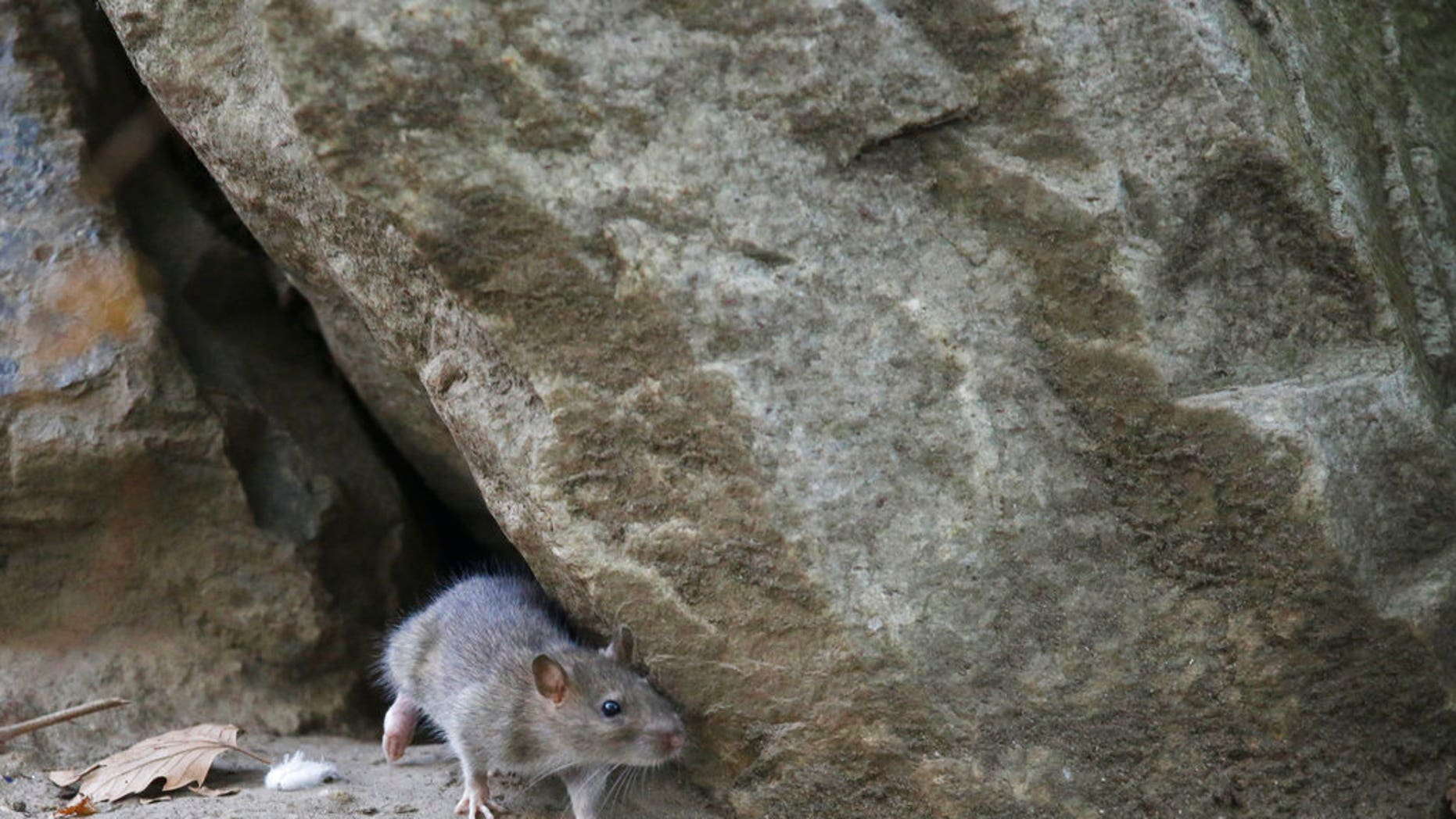 NYC Mayor Bill de Blasio has announced a $32 million plan to reduce the city's rat population.