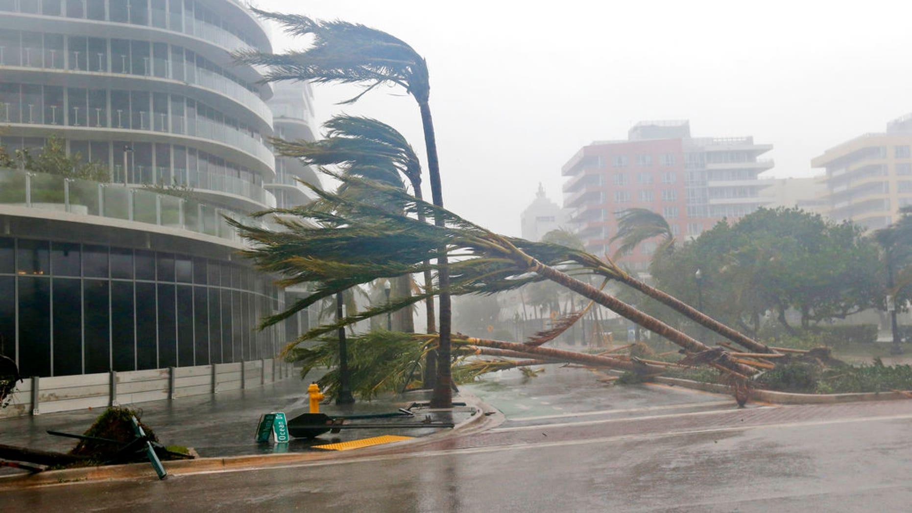 Palm trees lie strewn across the road in Miami Beach.