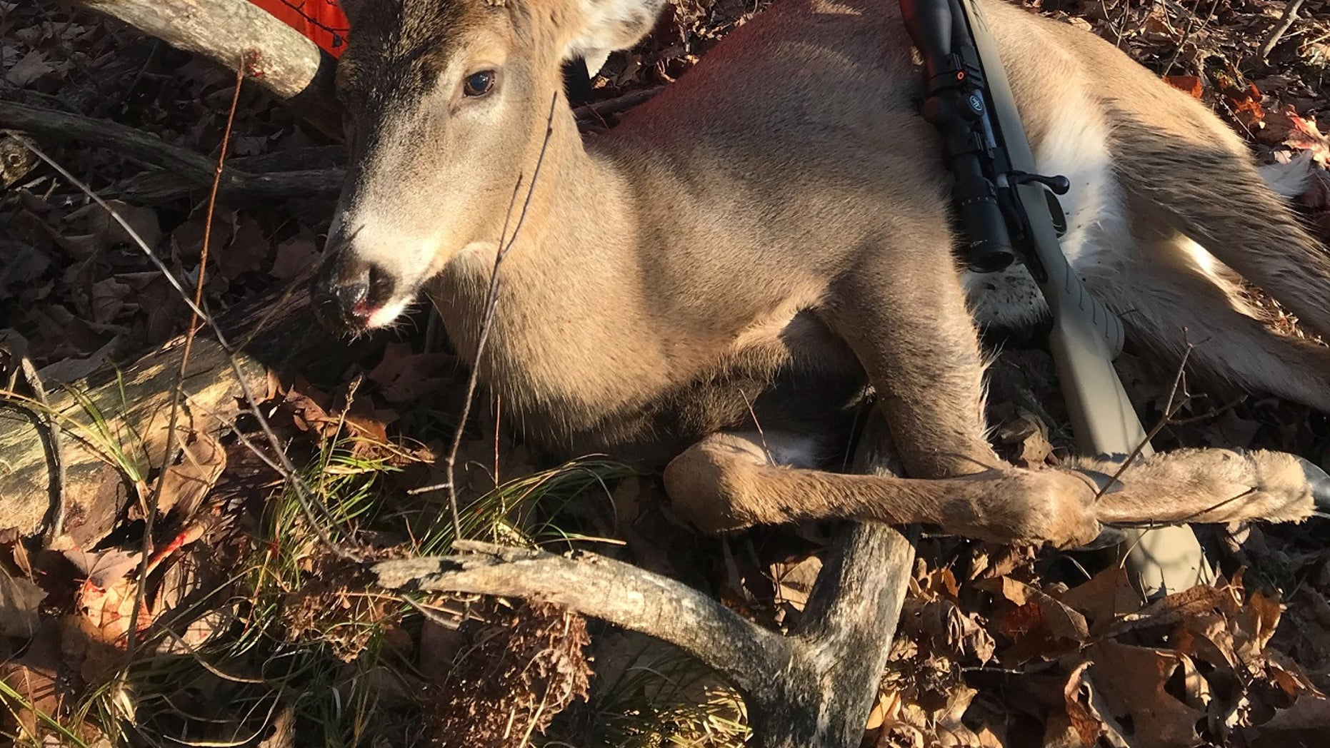 Lexie Harris, 6, poses after bagging a buck in Taylor County, Wis.