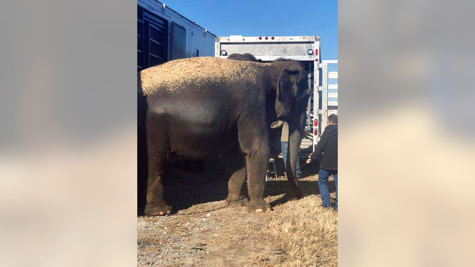 A trailer transporting four circus elephants across a busy Oklahoma highway Wednesday stalled after its floor began to cave in, leaving the mammals stranded for nearly two hours.