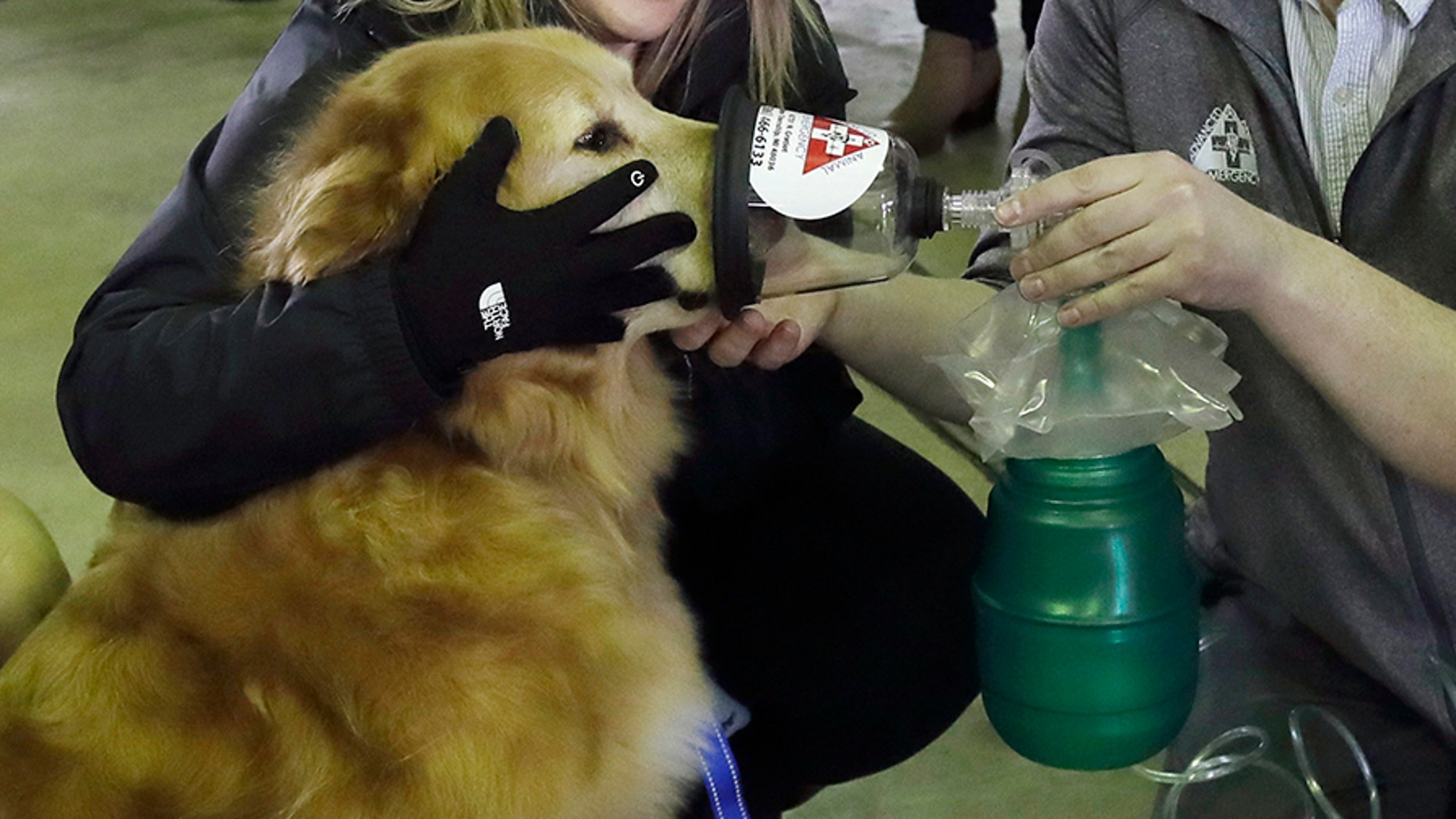 An oxygen mask is demonstrated on Smokey, a golden retriever, on Thursday in Detroit. The Detroit Fire Department is the recipient of more than 800 pet oxygen masks.