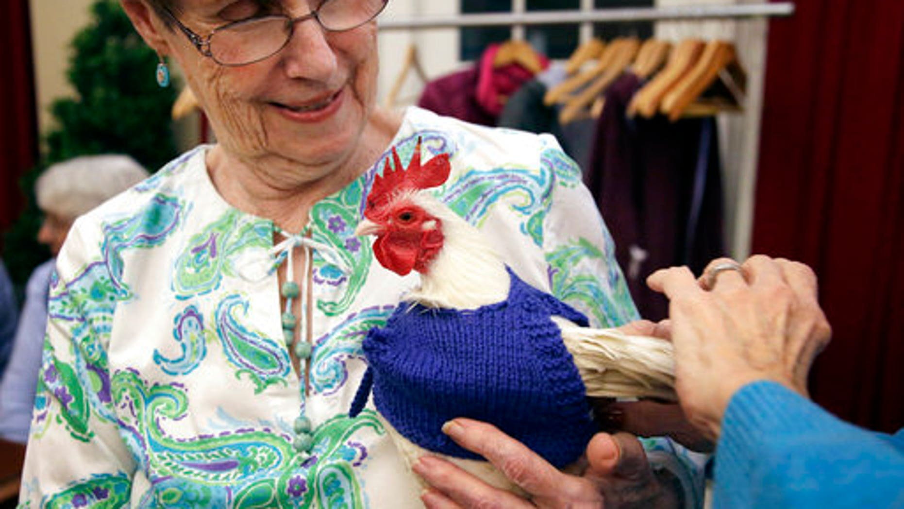 """Nancy Kearns holds """"Prince Peep,"""" a rooster native to Malaysia, as the bird is fitted with a sweater at the retirement home."""