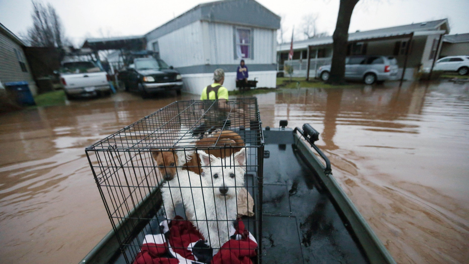 Sam Breen tows his skiff as he helps a friend retrieve his dogs Edison, foreground, and Allie, from his home in Bossier City, La.