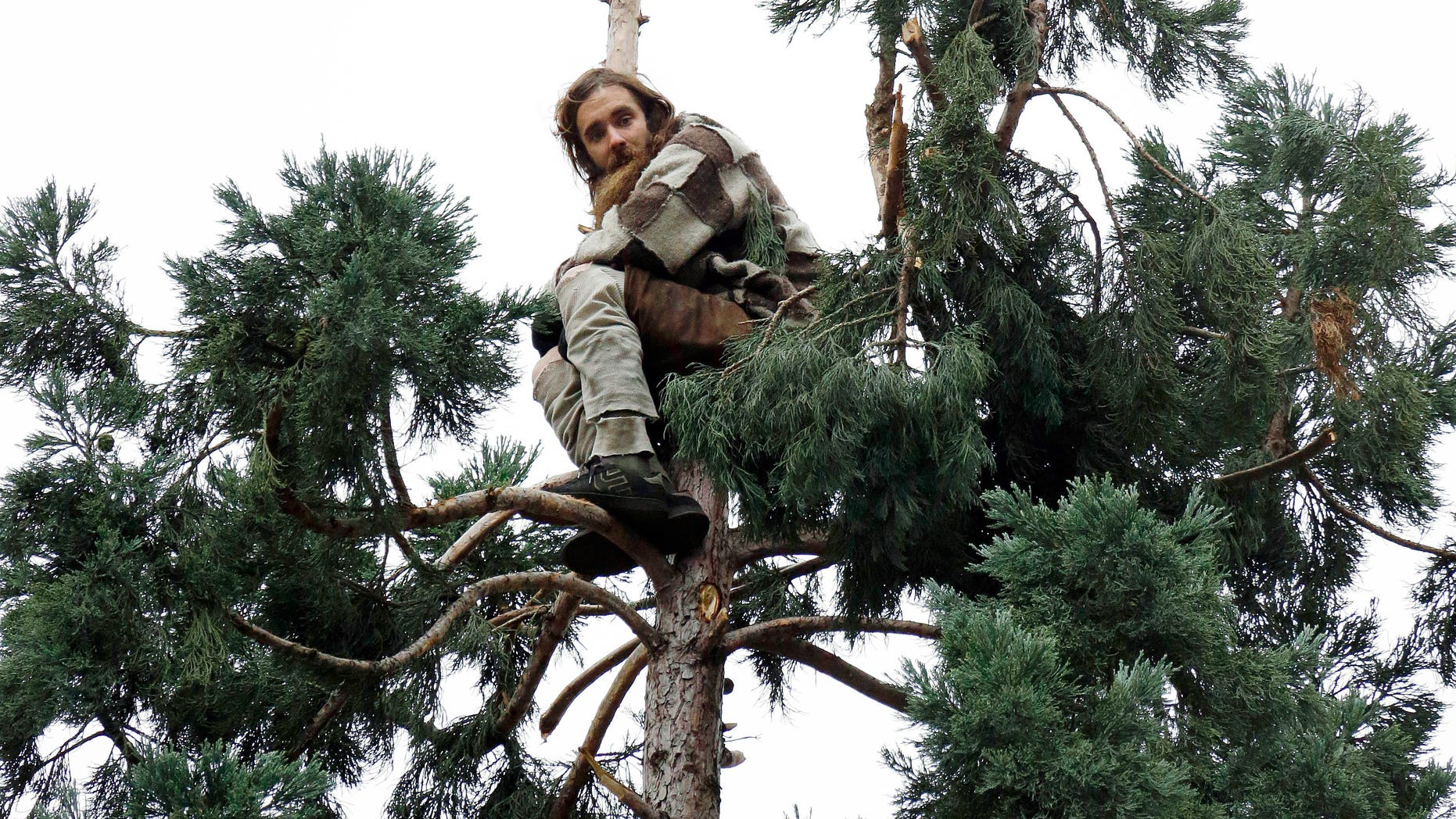 Cody Lee Miller stands near the top of the tree on March 23.