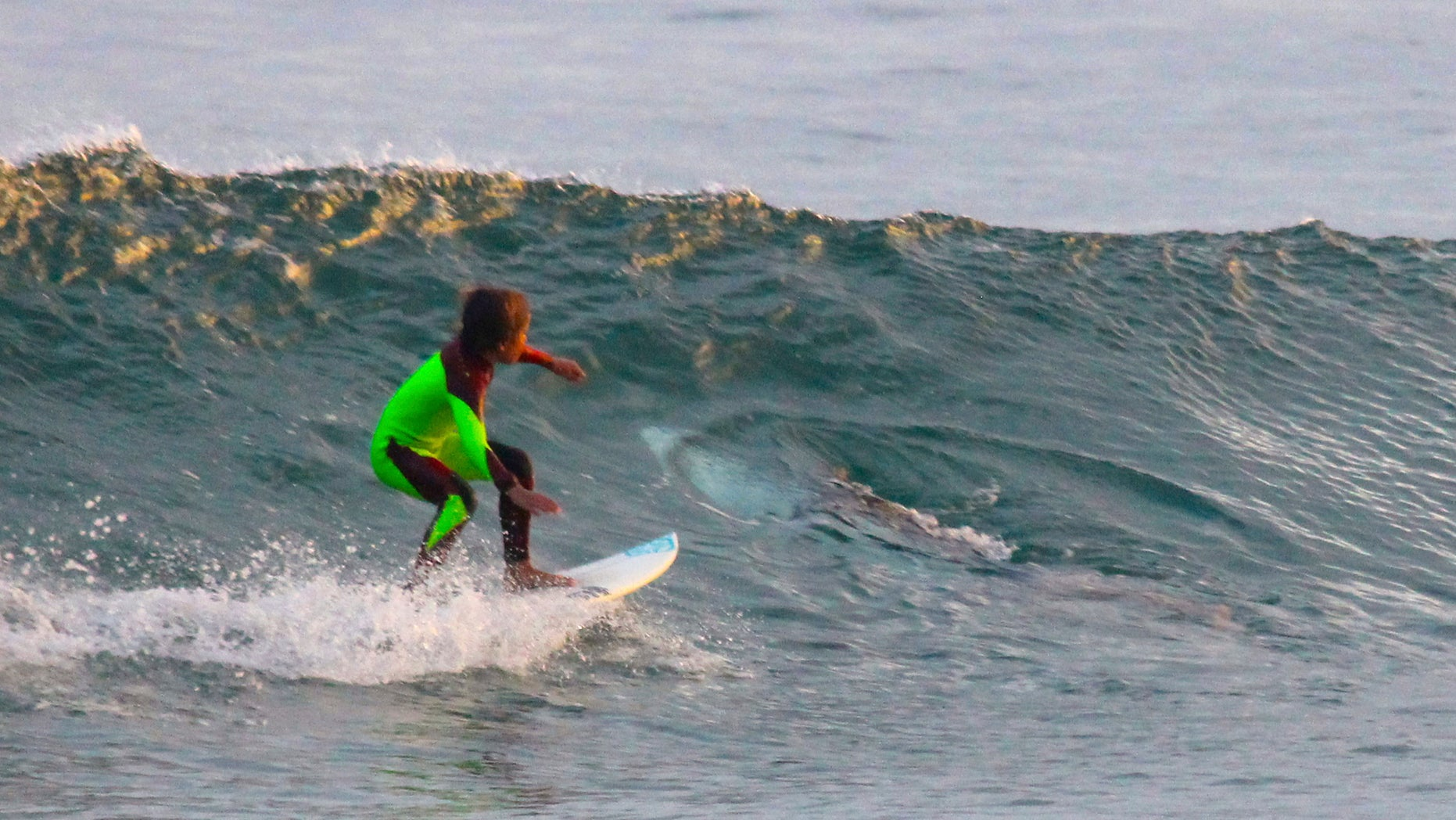 In this photo from Jan. 24, 2017, provided by Chris Hasson, 10-year-old Eden Hasson, Chris' son, surfs near what is believed to be a great white shark at Samurai Beach, Port Stephens, Australia.