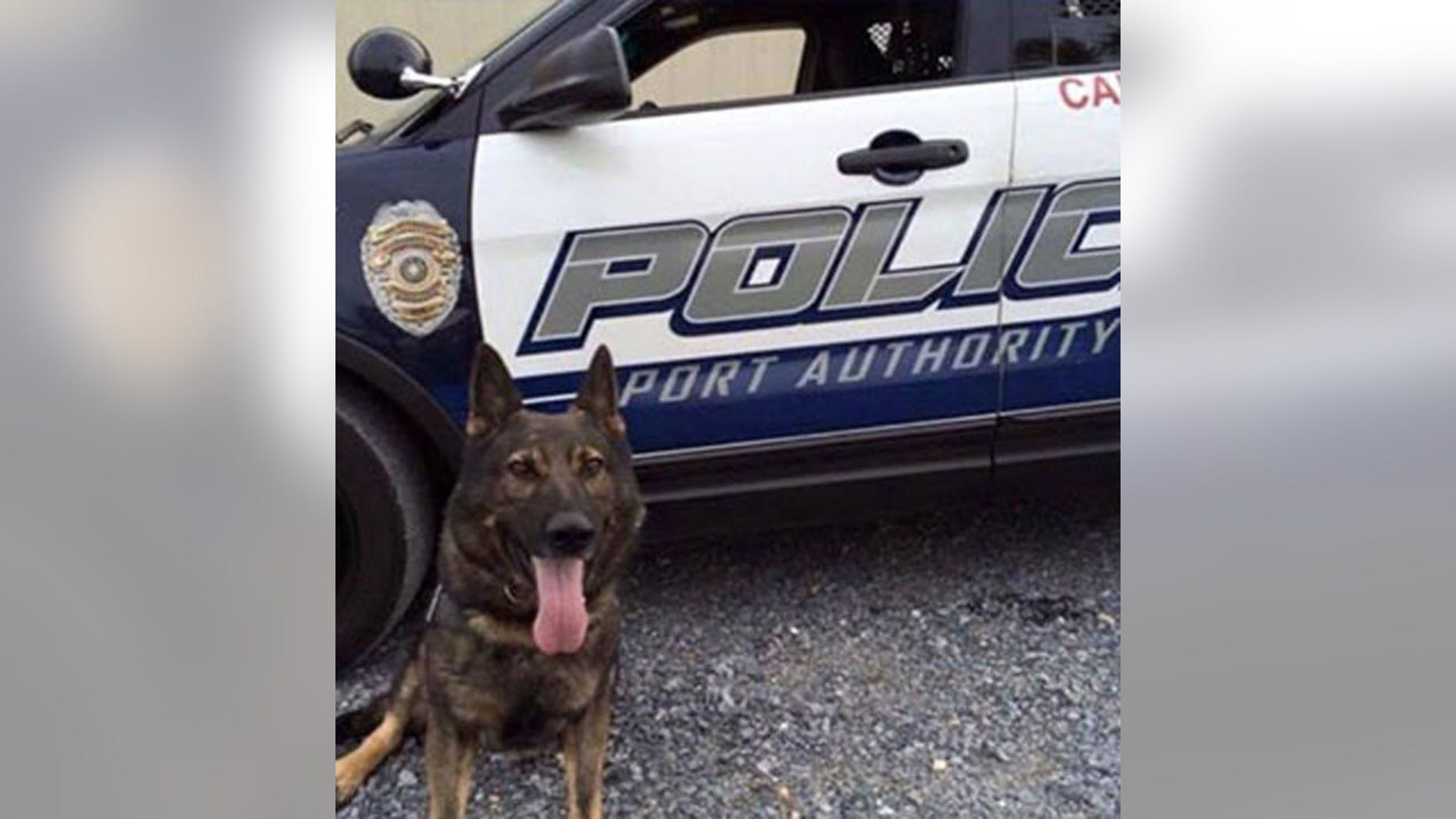 This undated photo shows Aren, a Port Authority of Allegheny County K-9 officer who was stabbed and killed by a suspect Jan. 31, 2016 (Facebook/Pittsburgh Police K-9 Unit)