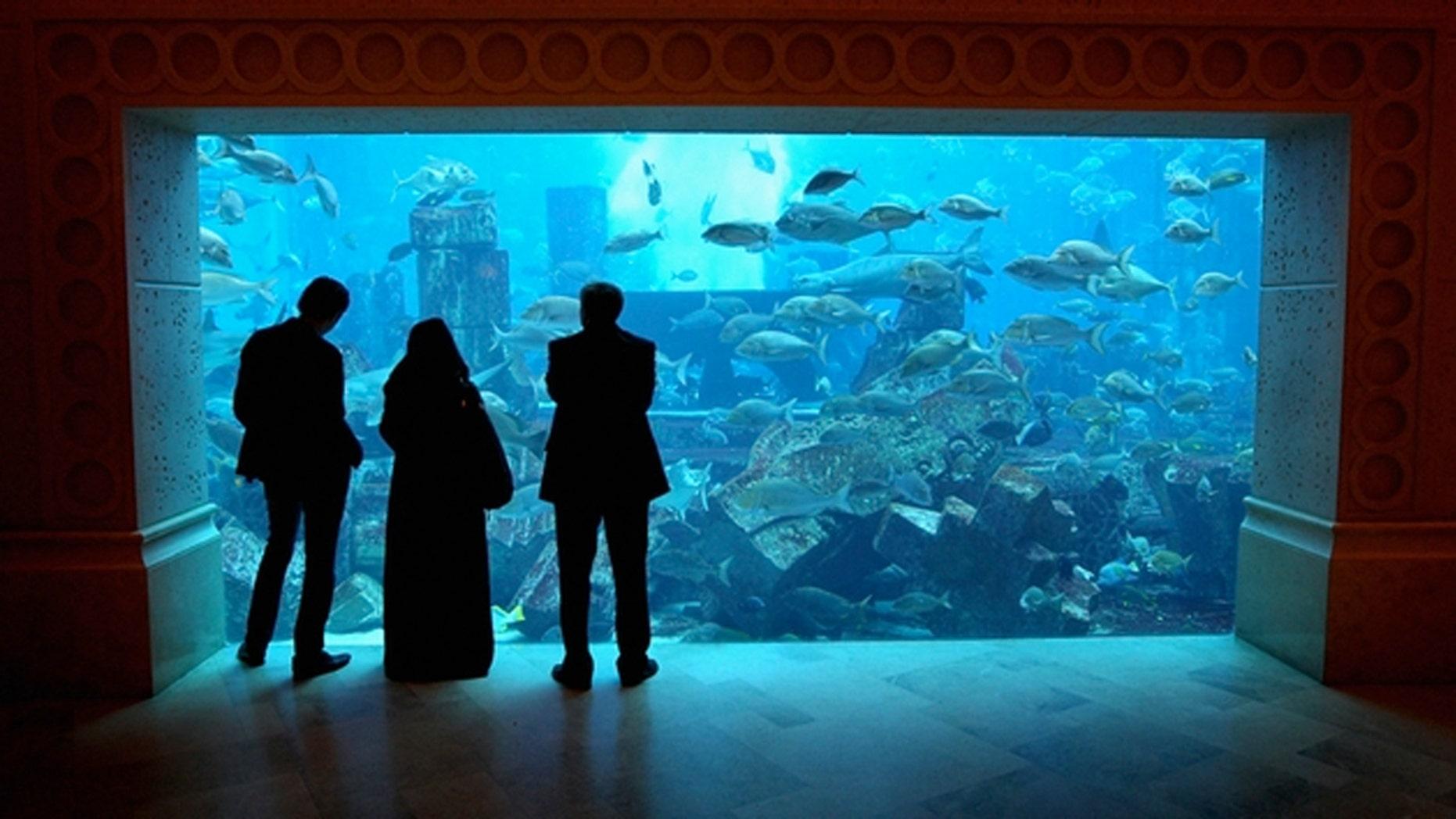 The giant tank at Atlantis the Palm Hotel in Dubai, United Arab Emirates. (Chris Jackson/Getty Images)