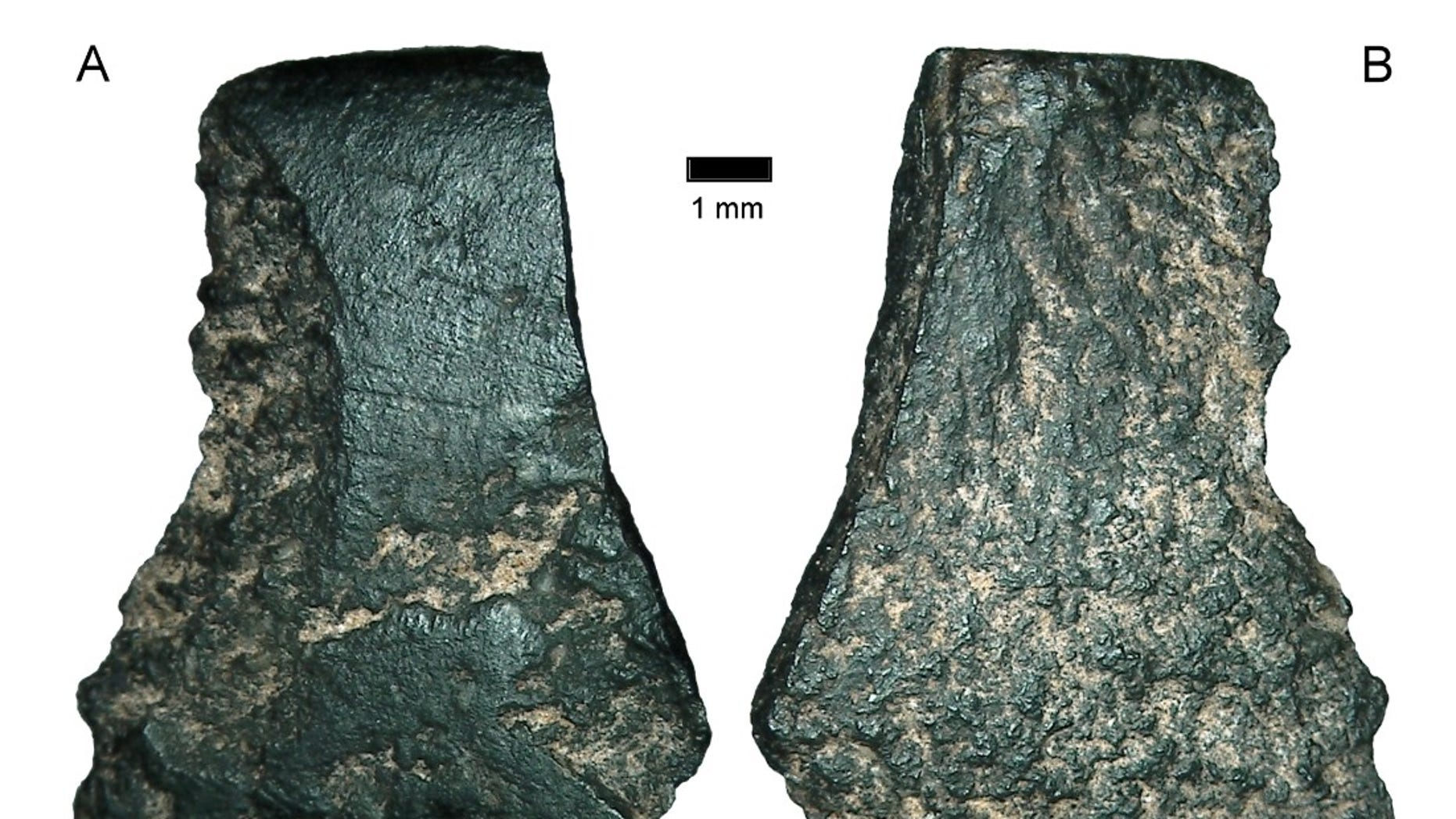 The world's oldest axe fragment, seen here under a microscope, is the size of a thumbnail.  (Australian Archaeology)