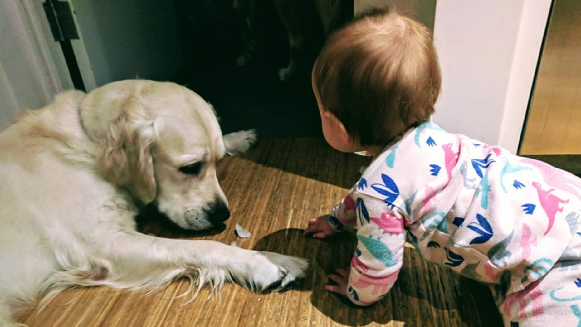 Two golden retrievers helped a toddler escape her bedroom.