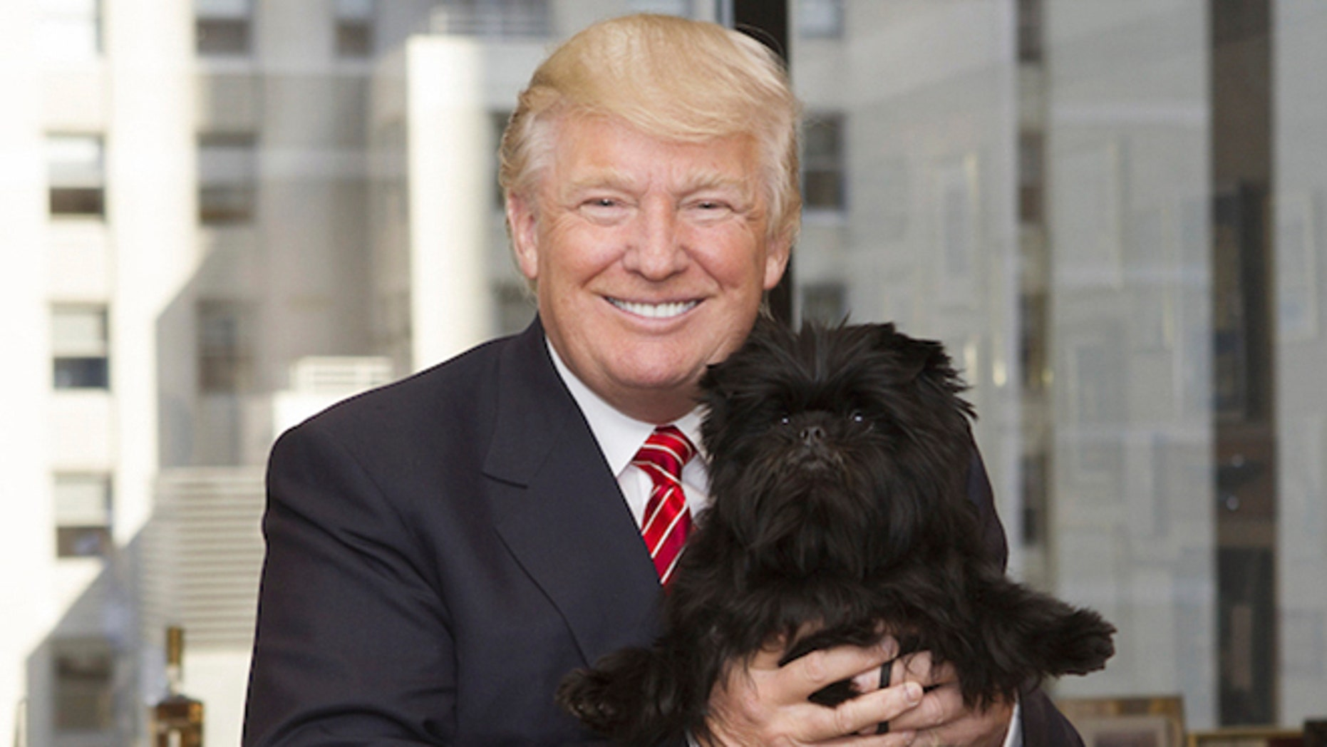 In this February 2013 photo provided by Lisa Croft-Elliott, Donald Trump holds Banana Joe, the affenpinscher who had just won best in show at the Westminster Kennel Club dog show, at Trump Tower, in New York.