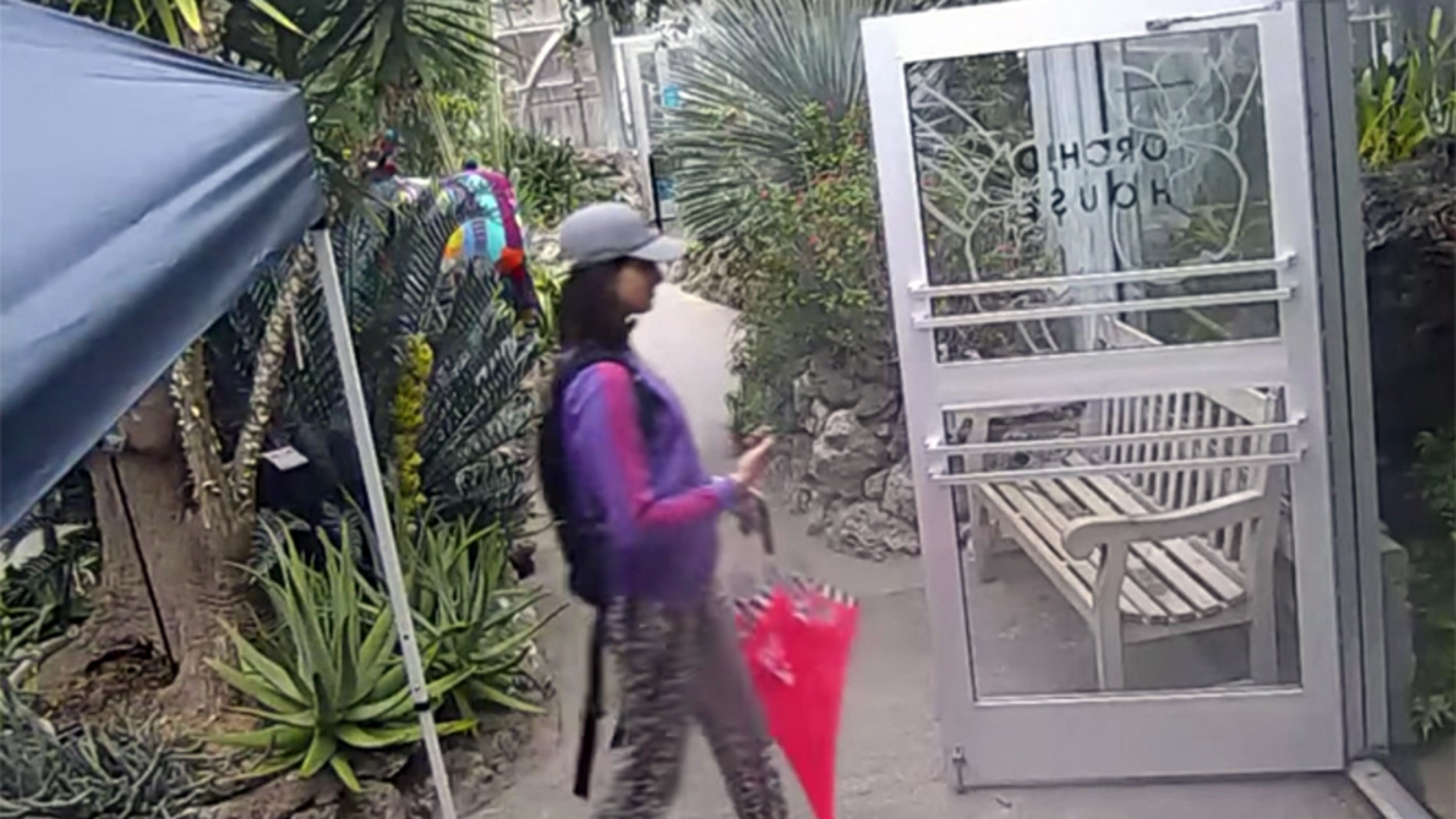 Police in Cincinnati are looking for this woman who they say was caught on video surveillance stealing a rare butterfly from the Krohn Conservatory.
