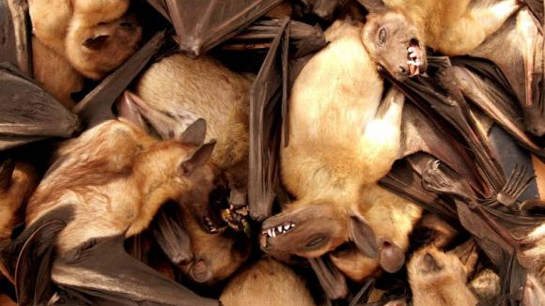 Fruit bats are seen for sale at a food market in Brazzavile, Republic of Congo, in this file photograph.
