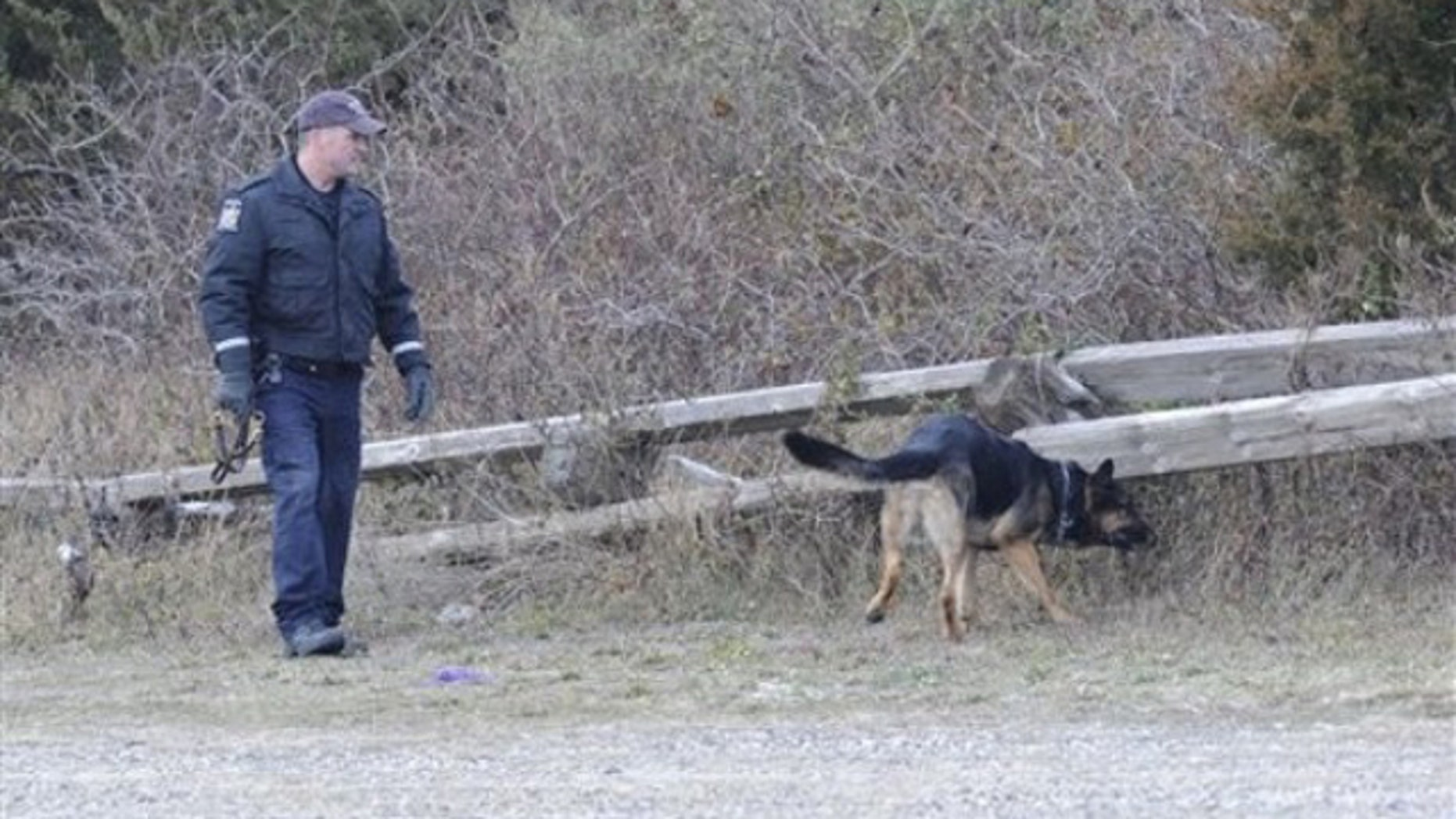 K-9 unit police use a cadaver dog to search an area in Oak Beach last month (AP).