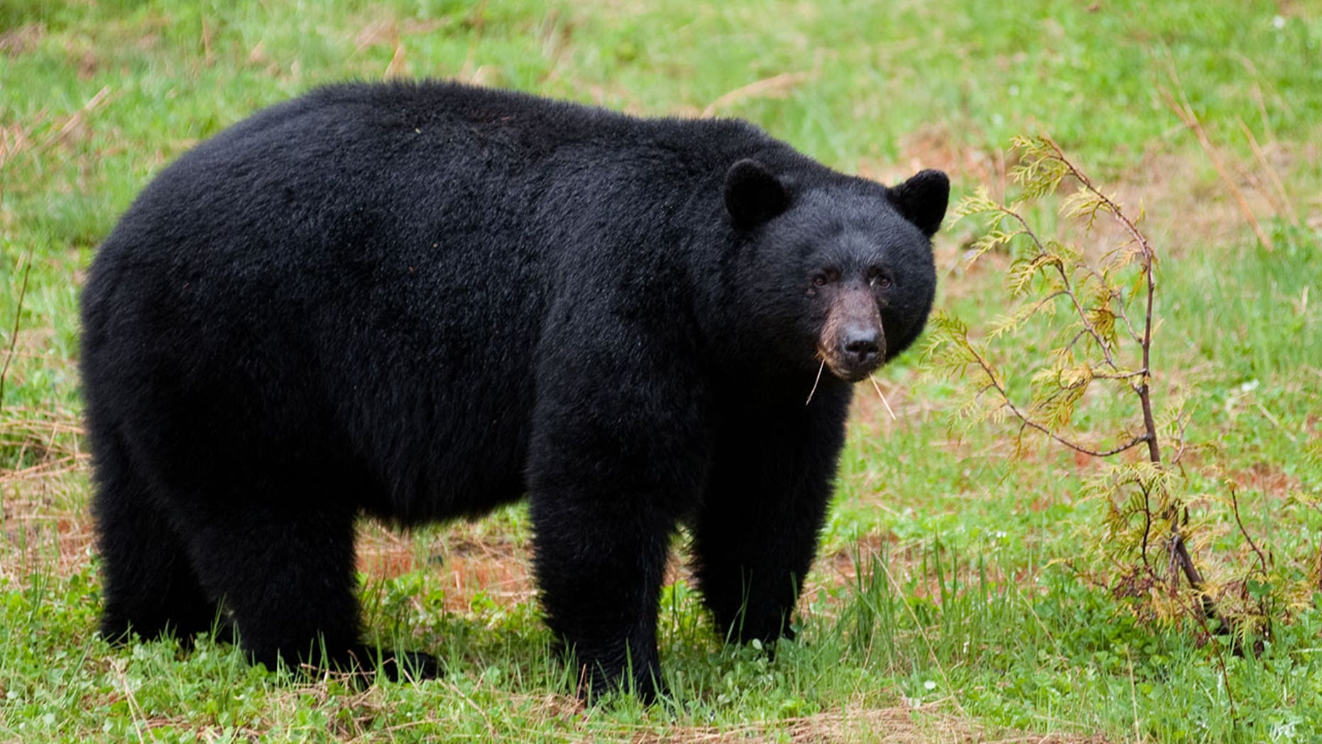 Protesters were arrested early on Monday morning during protests over New Jersey's annual bear hunt.