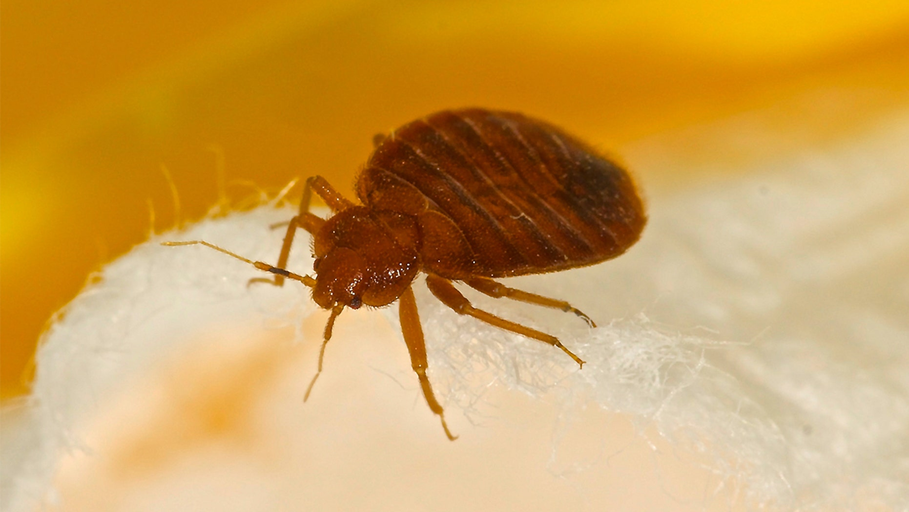 For the second year in a row, Baltimore ranked as the worst city for bed bug infestation.
