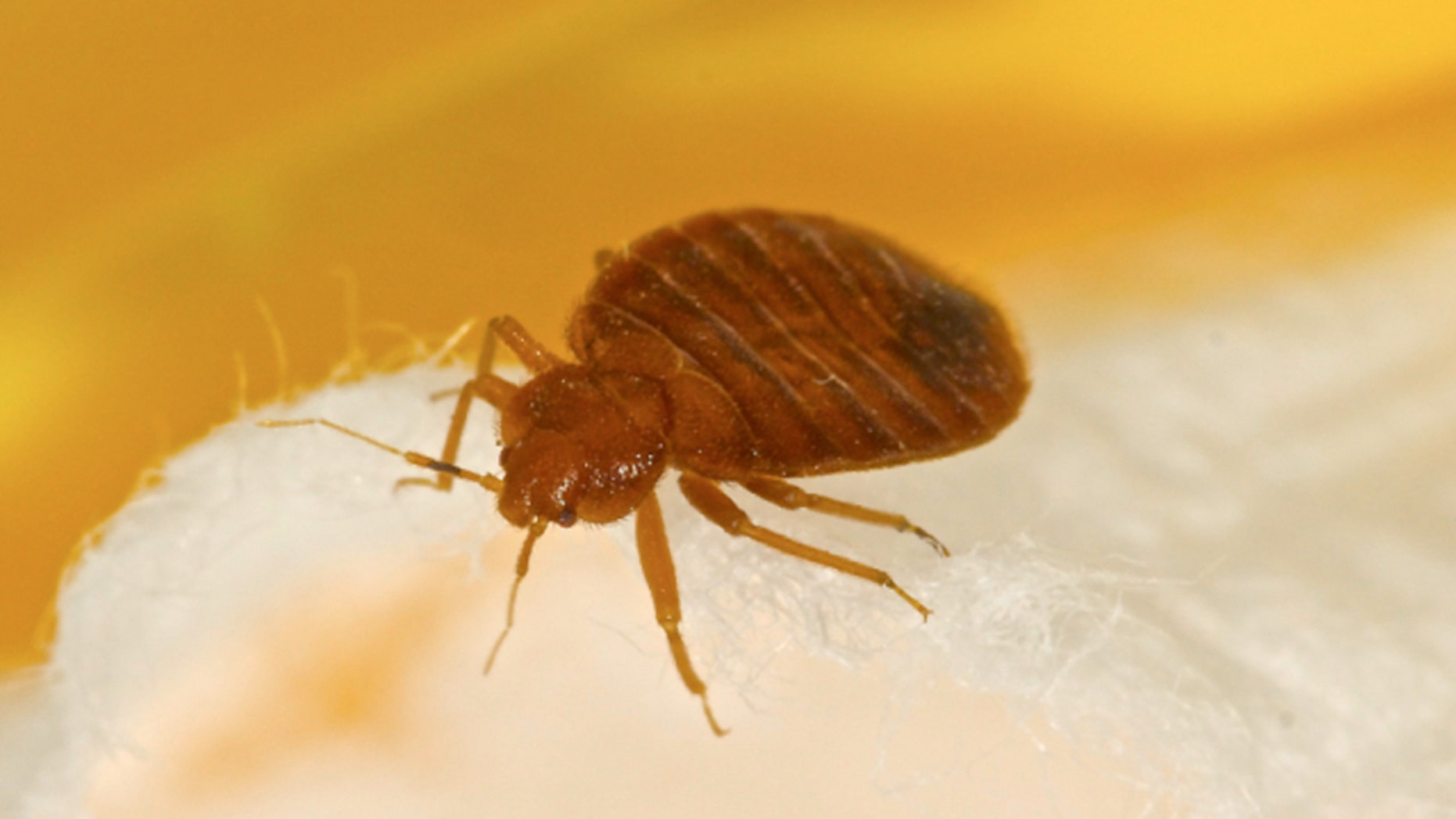 Telltale signs of a bed bug infestation are blood or poop on the mattress.