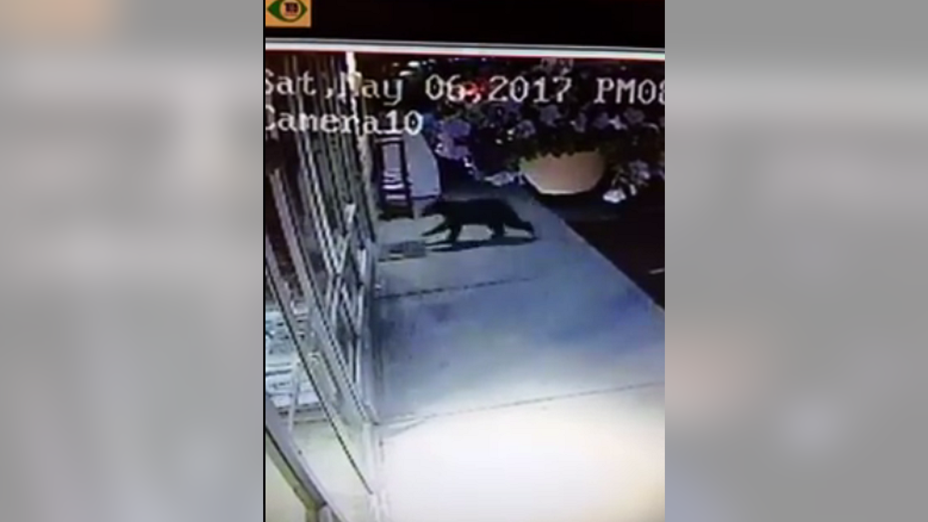 A surveillance video from Coulee Hardware in Washington captured a black bear crashing into the store's front window on May 6, 2017.