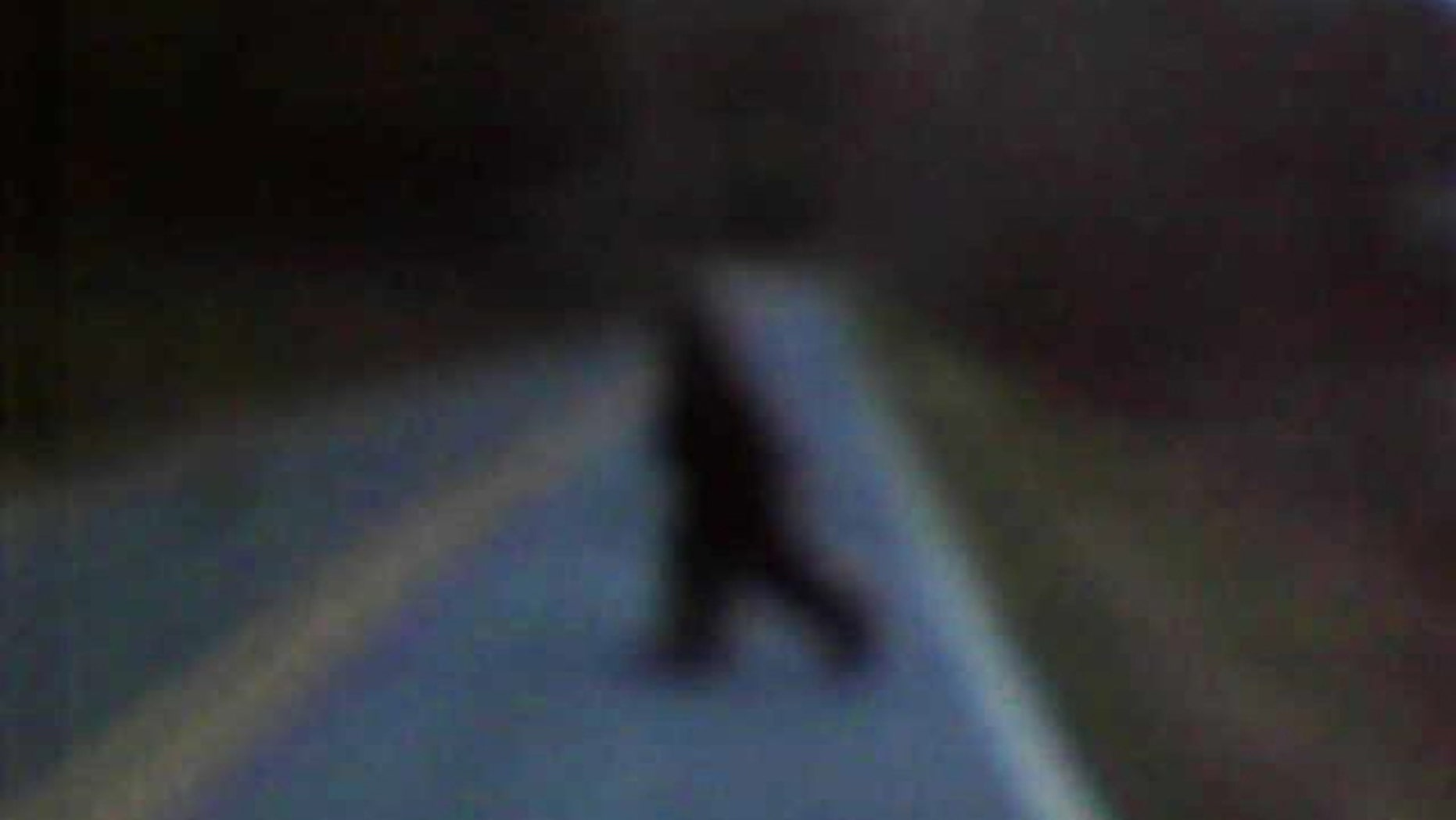 Bigfoot?