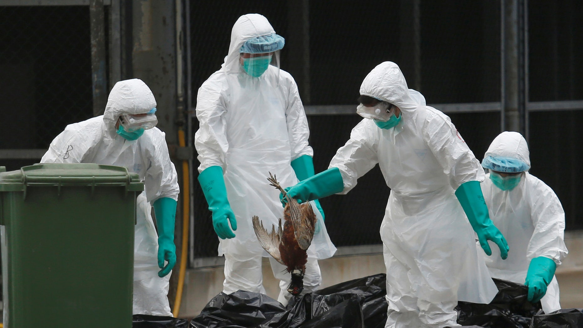 Health officers cull poultry at a wholesale market, as trade in live poultry suspended after a spot check at a local street market revealed the presence of H7N9 bird flu virus, in Hong Kong June 7, 2016.    REUTERS/Bobby Yip.     TPX IMAGES OF THE DAY      - RTSGBDX