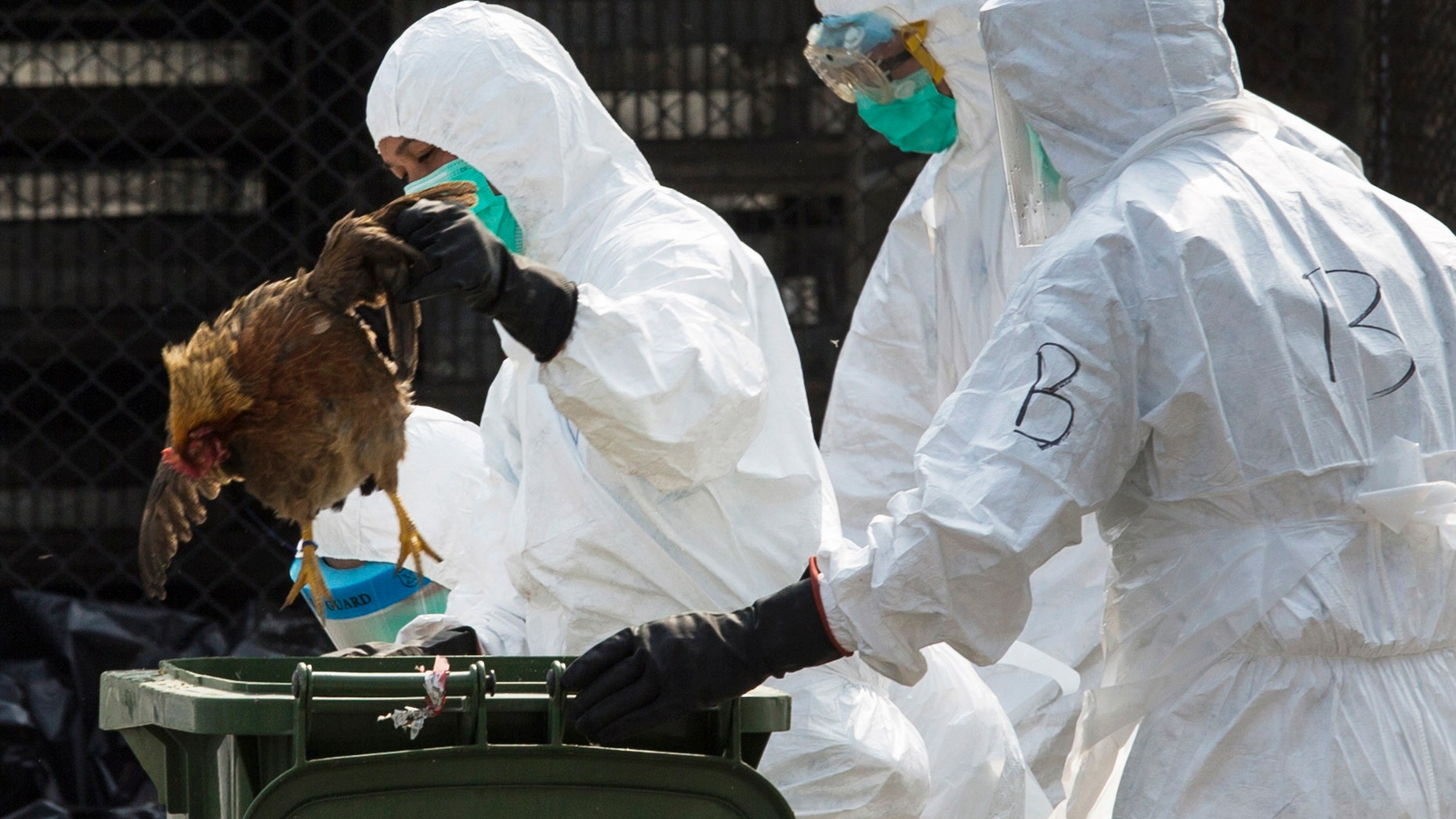 A health worker removes a dead chicken at a wholesale poultry market in Hong Kong January 28, 2014. REUTERS/Tyrone Siu