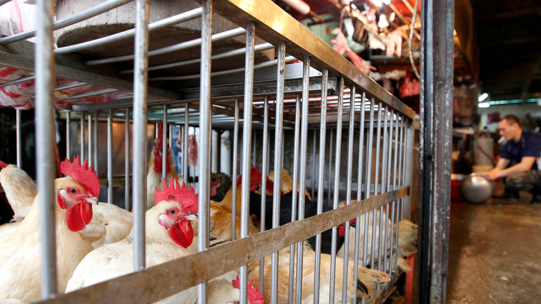 Chickens sit inside cages in a traditional market in Taipei April 25, 2013.