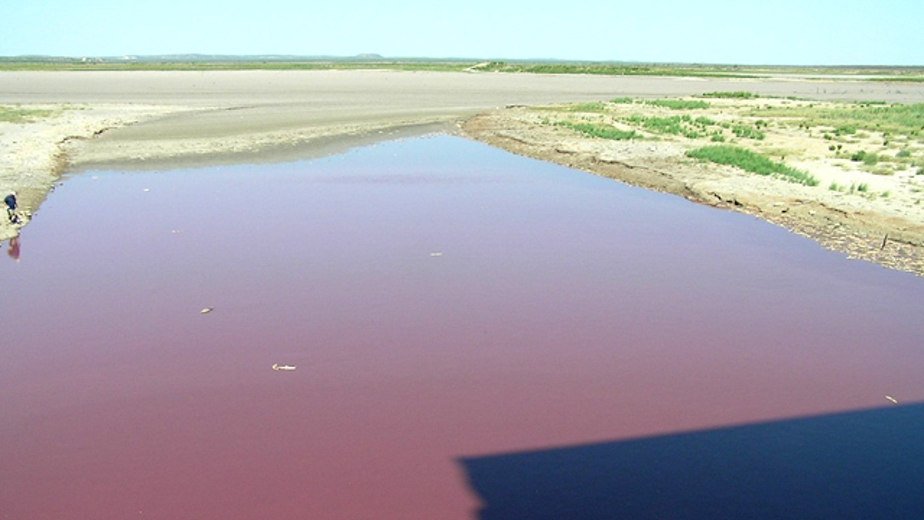 OC Fisher, a reservoir in West Texas, turned blood-red in recent weeks  what's left of it anyway. Due to unrelenting drought in Texas, the lake has almost entirely dried up, leaving thousands of dead fish behind. As of the last week in July, when this photo was taken, bacteria had turned the stagnant dregs of the lake red.