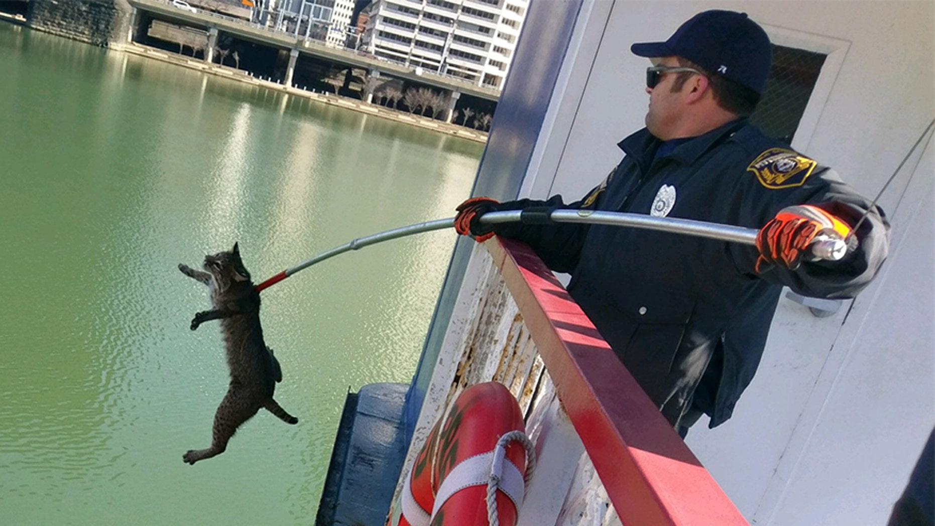 The bobcat tried to escape the boat after being found, but animal control officers were able to bring it to safety.