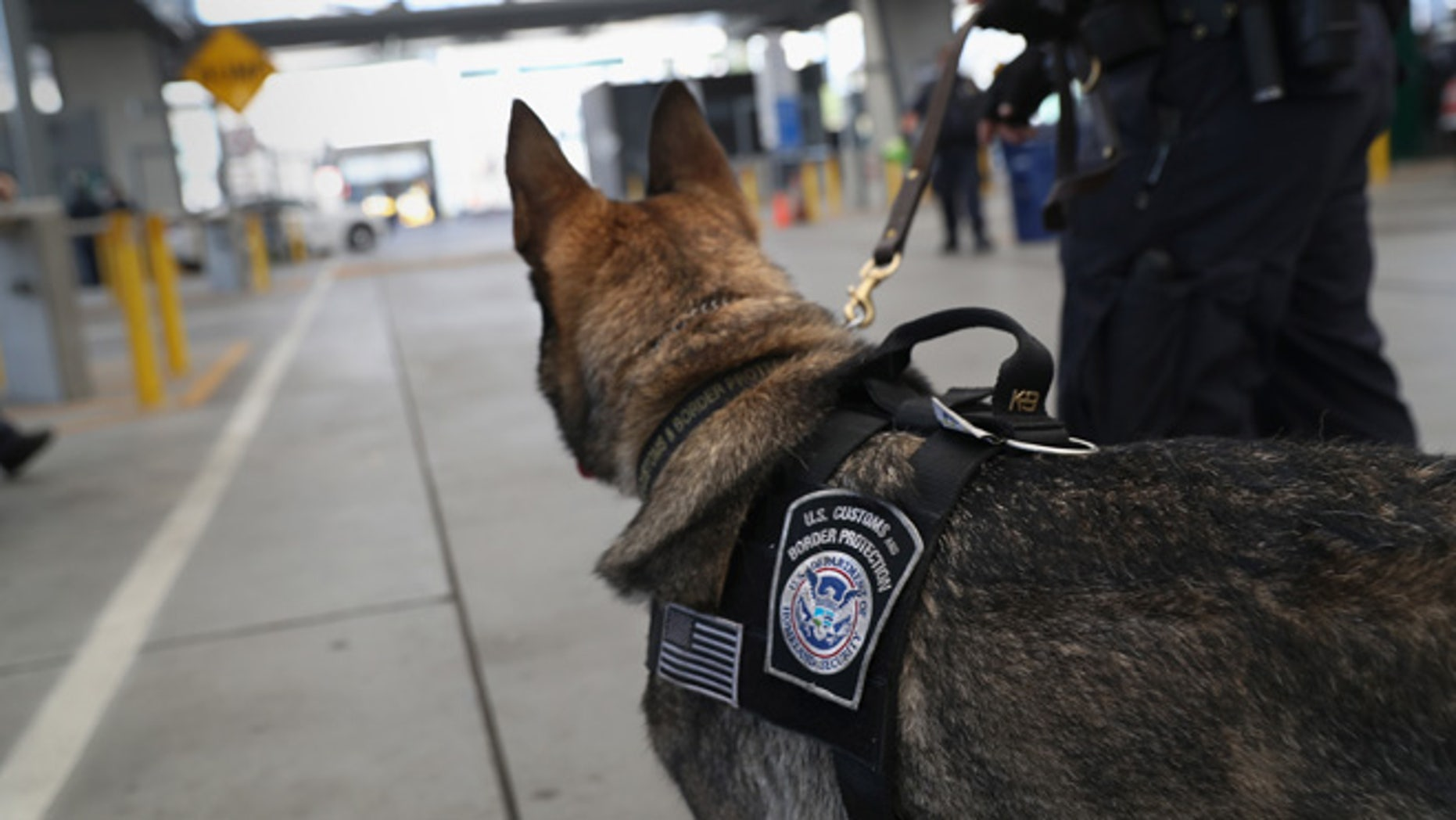SAN YSIDRO, CA - SEPTEMBER 23:  A U.S. Customs and Border Protection K-9 unit waits to check vehicles crossing into the United States from Mexico on September 23, 2016 in San Ysidro, California. Daily more than 10,000 people legally cross the border, mostly for work, at San Ysidro, making it the busiest port of entry on the 2,000 mile border between the United States and Mexico. Securing the border and controlling illegal immigration have become key issues in the U.S. Presidential campaign.  (Photo by John Moore/Getty Images)