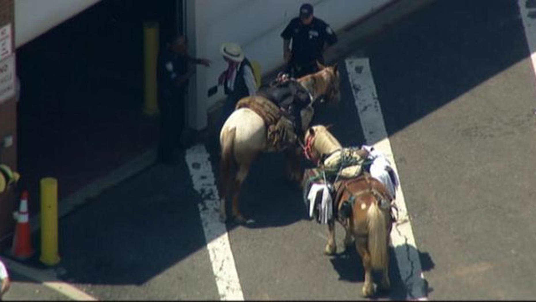 Police stopped the man dressed as a cowboy after he and his horses crossed the bridge.