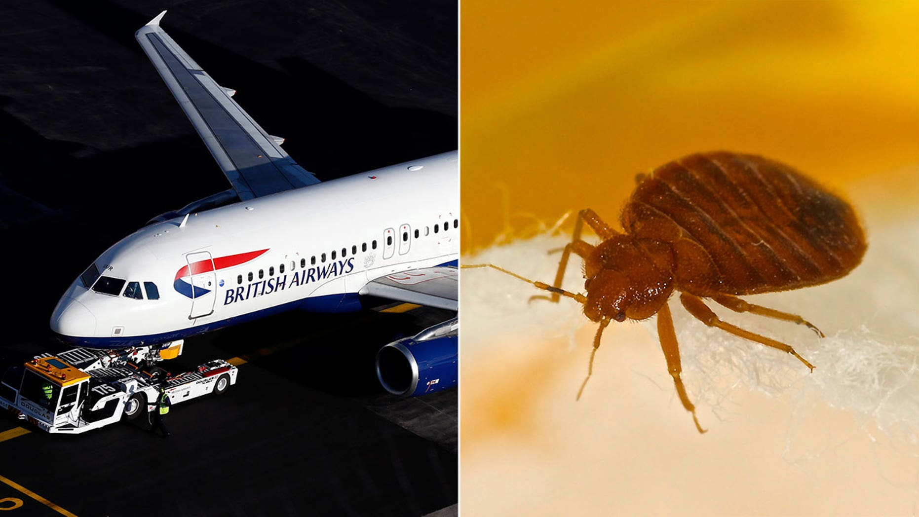 The cabin crew of a recent British Airways flight reportedly refused to fly after spying bedbugs in the cabin.