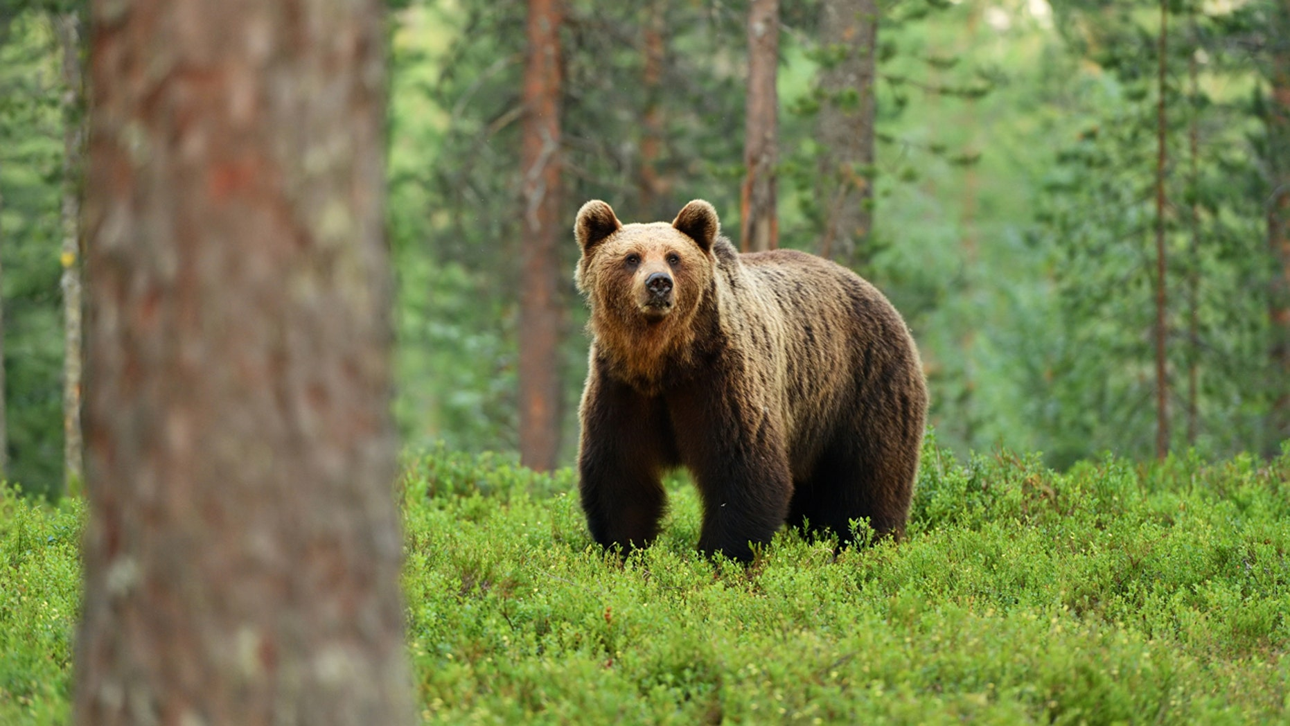 A couple of cyclists in Alaska thwarted a terrifying bear attack.